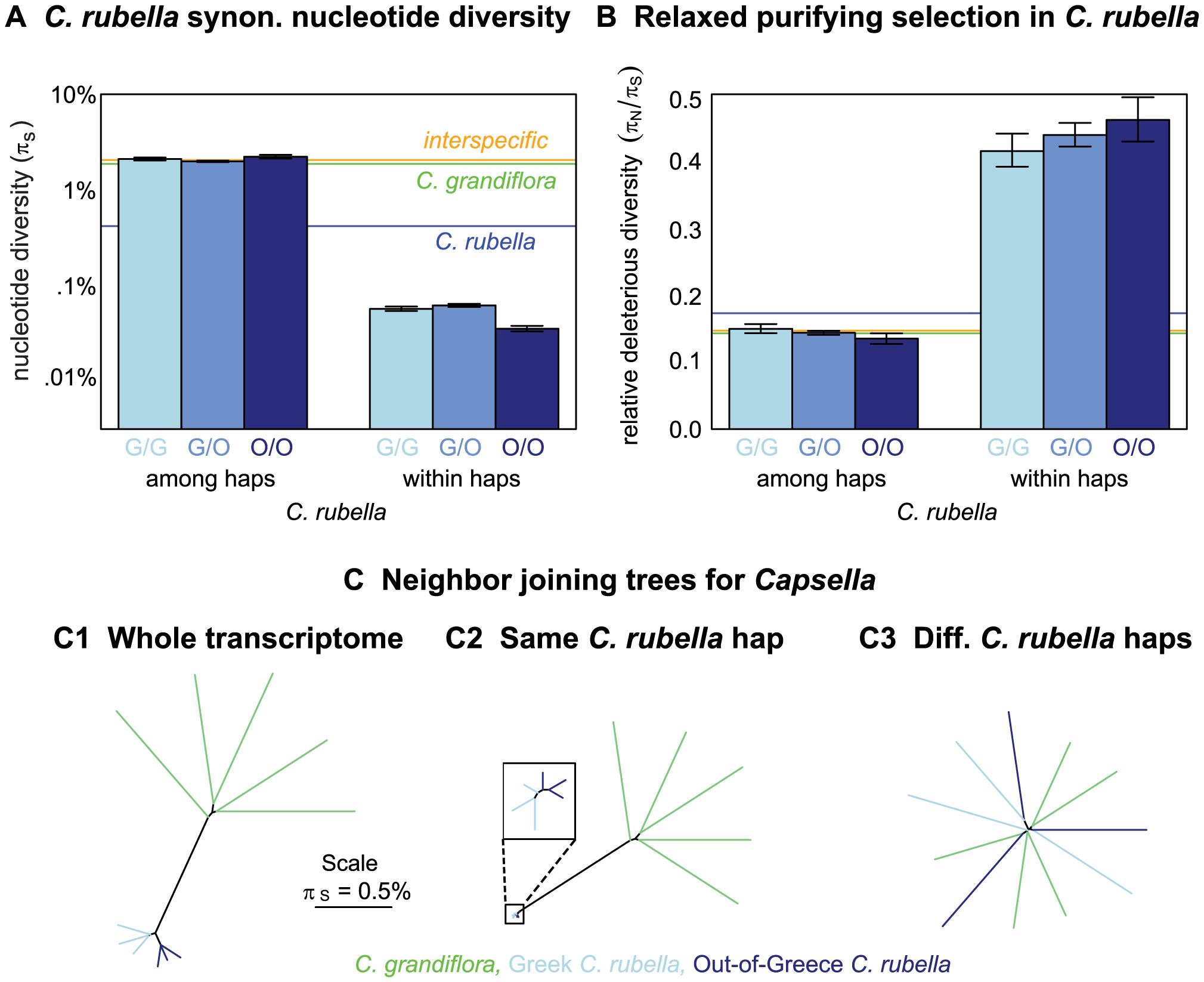 Variation within and among <i>C. rubella</i>'s founding haplotypes.