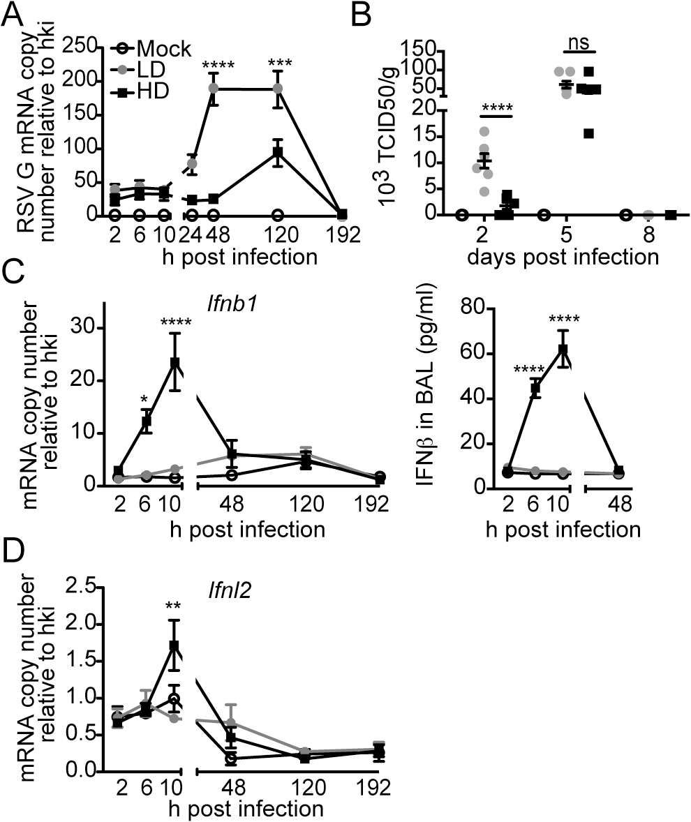 RSV iDVGs rapidly induce an antiviral response that controls viral load in mice.