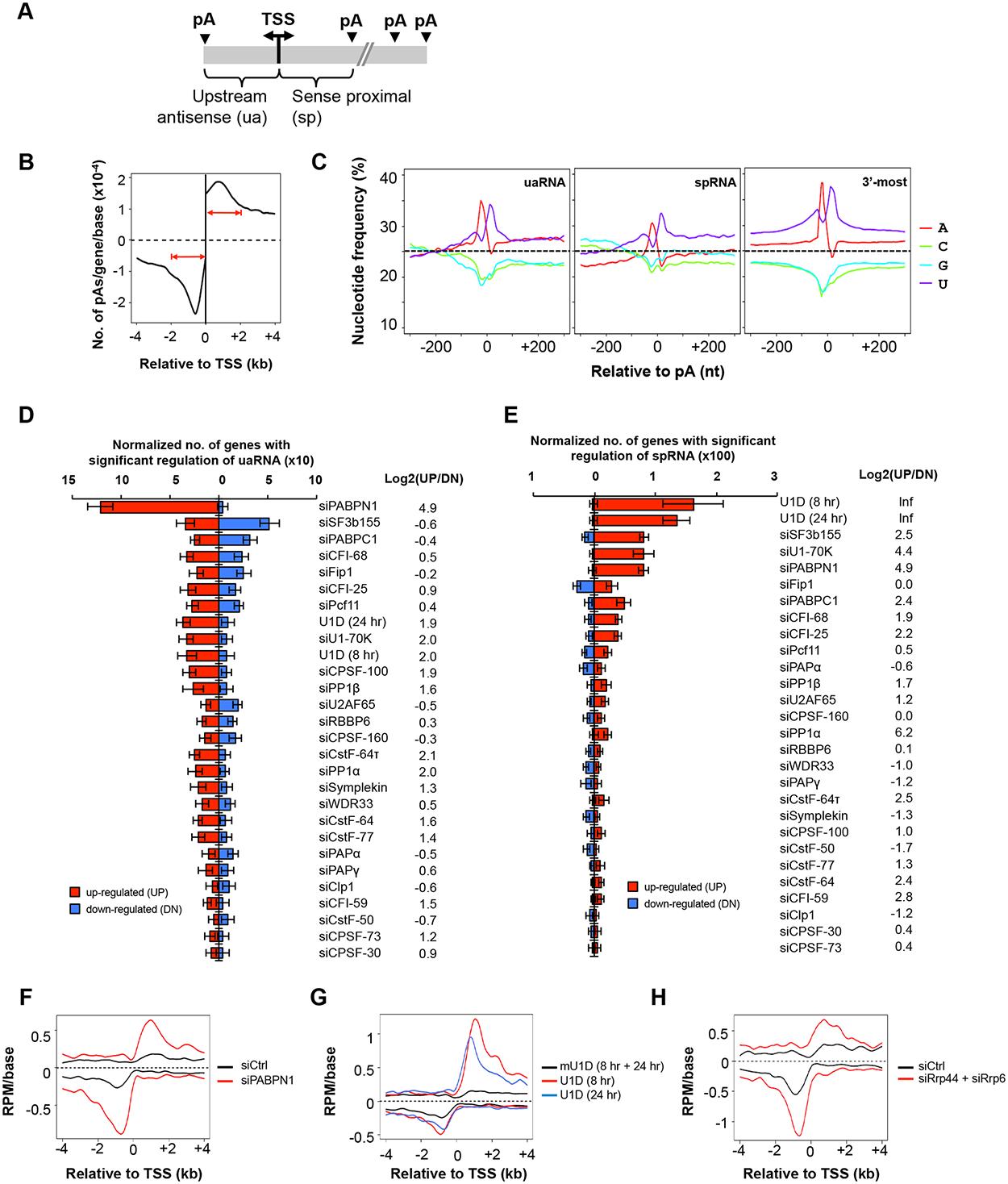 C/P events around the transcriptional start site (TSS).