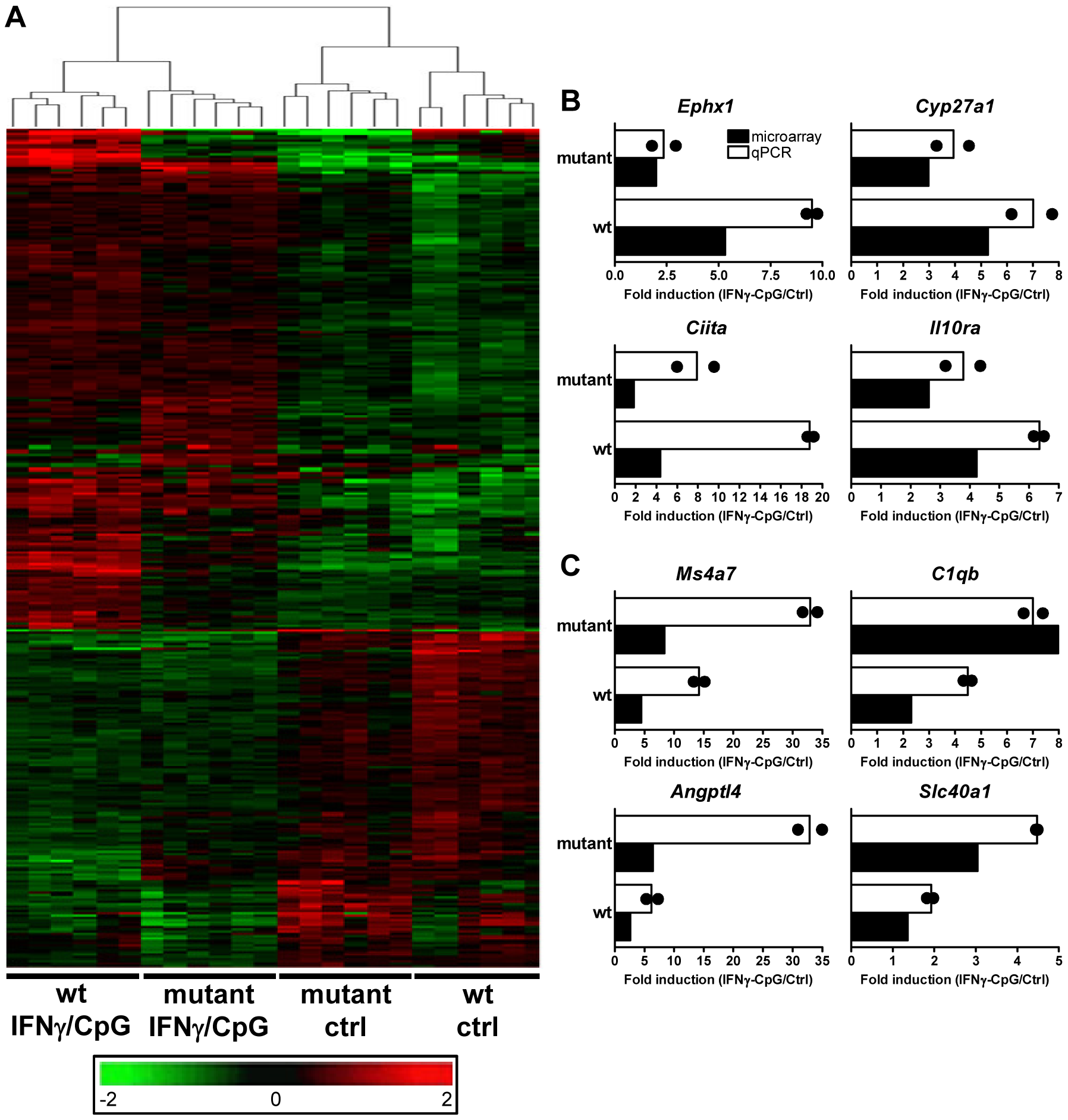 Transcriptional programs elicited by IFNγ/CpG exposure in wt and IRF8 mutant F2 mice.