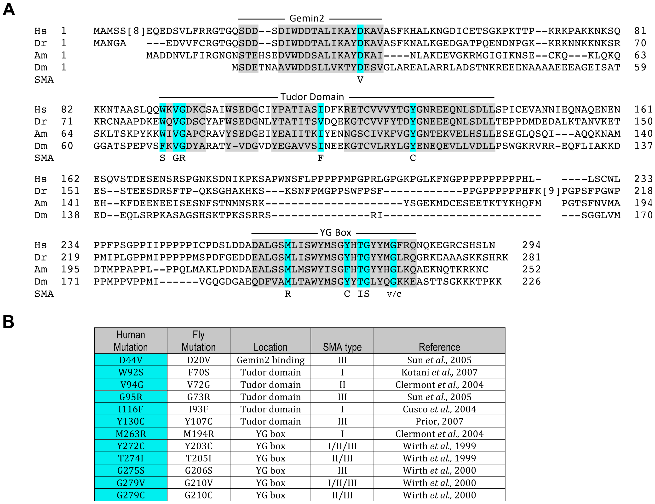 An allelic series of SMN missense mutations in <i>Drosophila</i>.