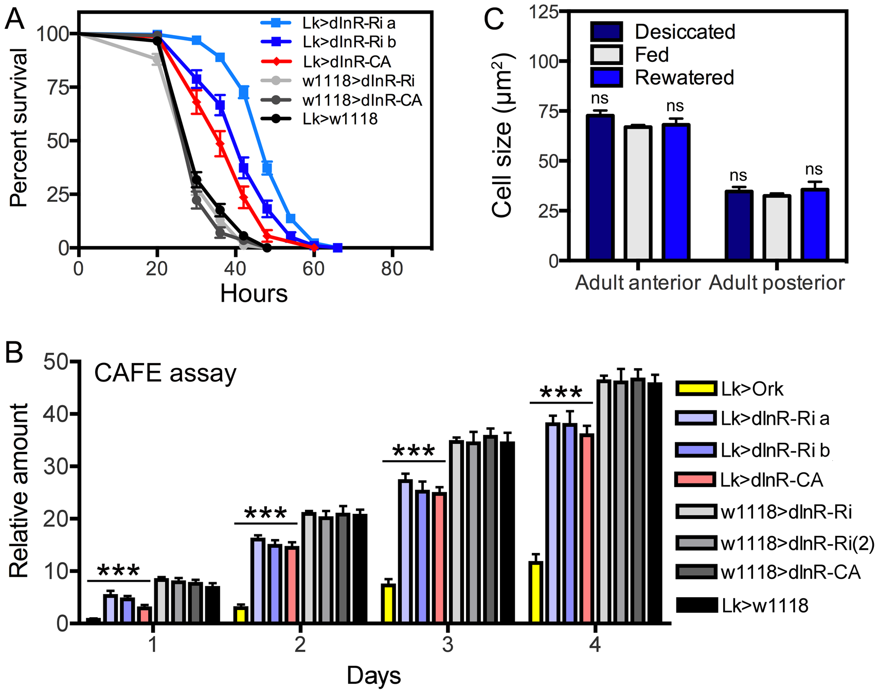 Functional effects of dInR manipulations of LK neurons in adult male flies.