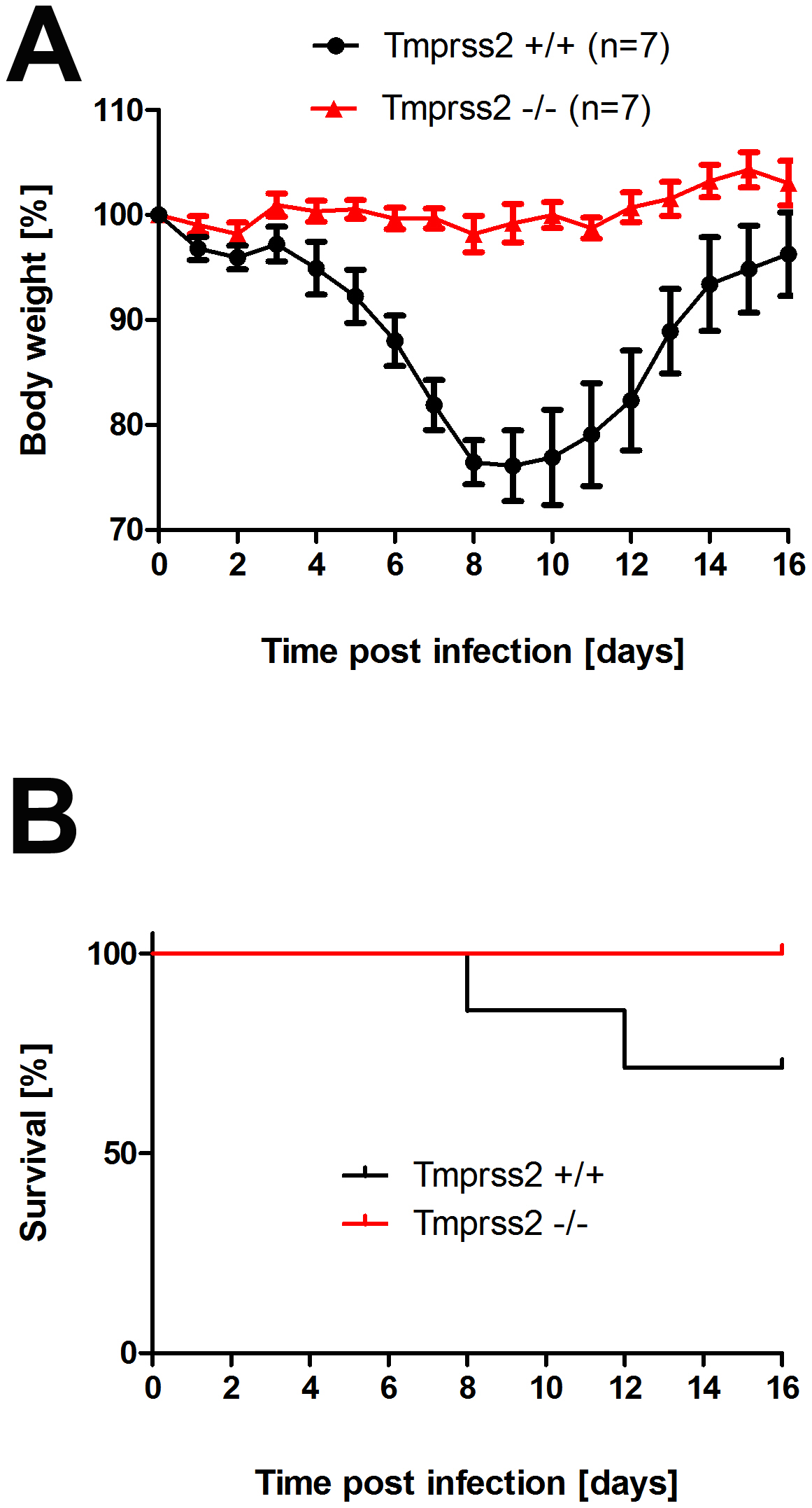 <i>Tmprss2</i> knock-out mice show reduced body weight loss and mortality after infection with low dose H3N2 influenza A virus infections.