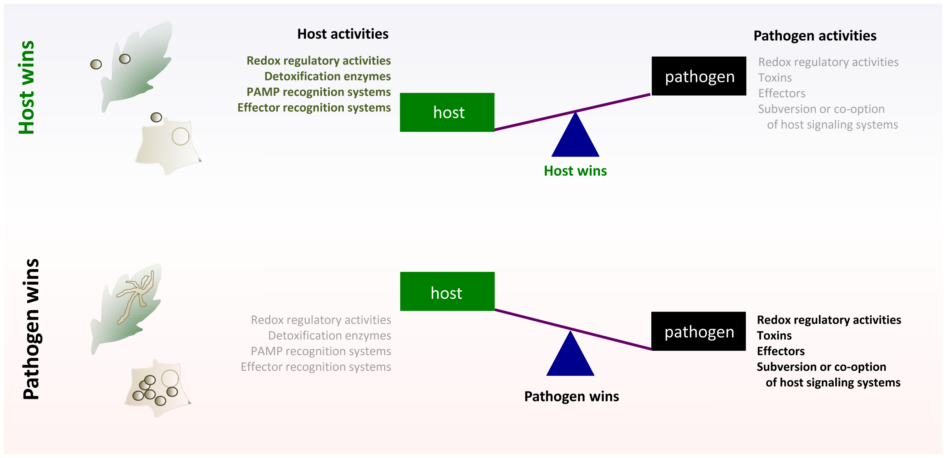 Tipping the balance for control in host–pathogen interactions; generalized schematic.