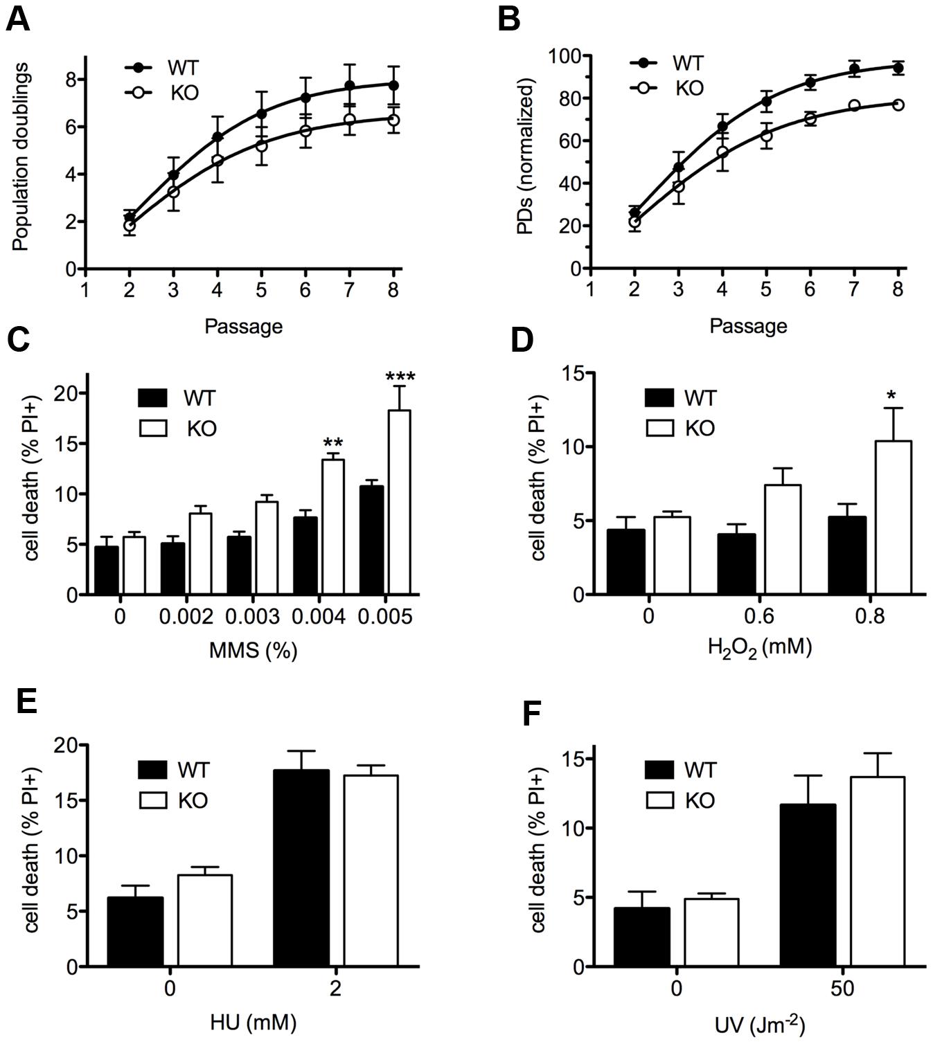 Cellular phenotypes of <i>Asciz</i>-deficient primary fibroblasts.