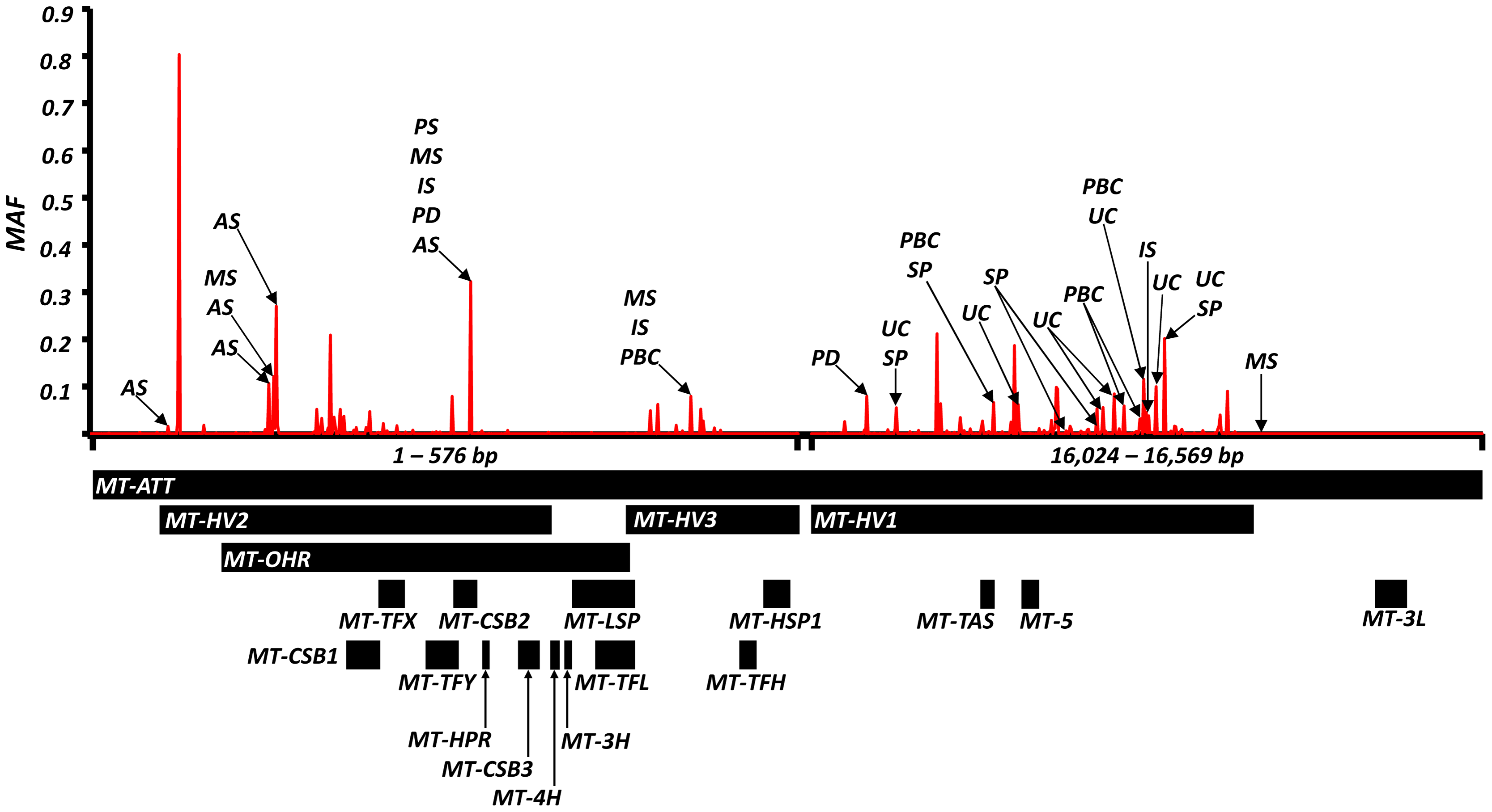 High-resolution map of the non-coding region of mtDNA (d-loop) showing allele frequencies in 7,729 control subjects and the position of alleles associated with eight common human diseases; where: AS = ankylosing spondylitis, IS = ischaemic stroke, MS = multiple sclerosis, PD = Parkinson's disease, PBC = primary biliary cirrhosis, UC = ulcerative colitis and SP = schizophrenia.