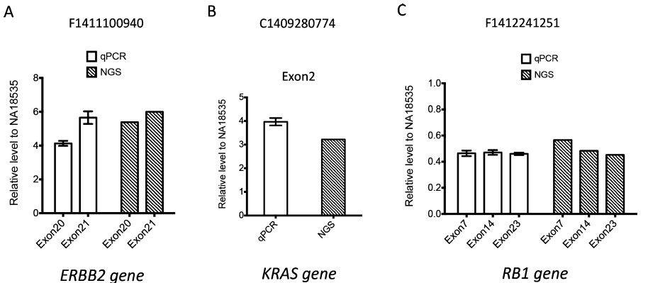 Validation of gene amplification by quantitative PCR (qPCR). Relative levels of amplified exons of three representative genes ERBB2 (A), KRAS (B) and RB1 (C) identified by next-generation sequencing (NGS) were detected by qPCR, which was further normalized by the relative level of reference ZNF80 gene region. The fold change for certain exon was calculated by normalizing to its relative level in normal control sample NA18535. Each value represents the mean  SEM of three independent experiments for qPCR results. Copy number change detected by NGS was also plotted together with qPCR data on the right.
