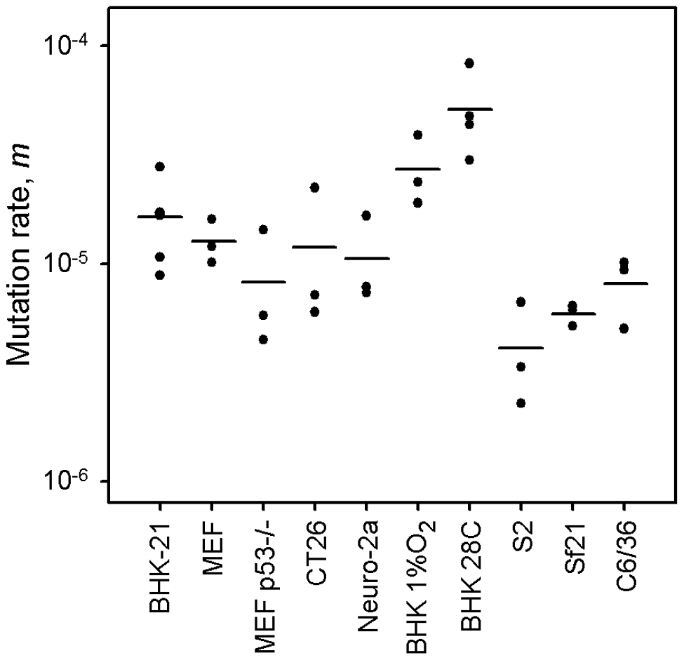 VSV mutation rate to the MAR phenotype estimated by the Luria-Delbrück fluctuation test in different cellular environments.