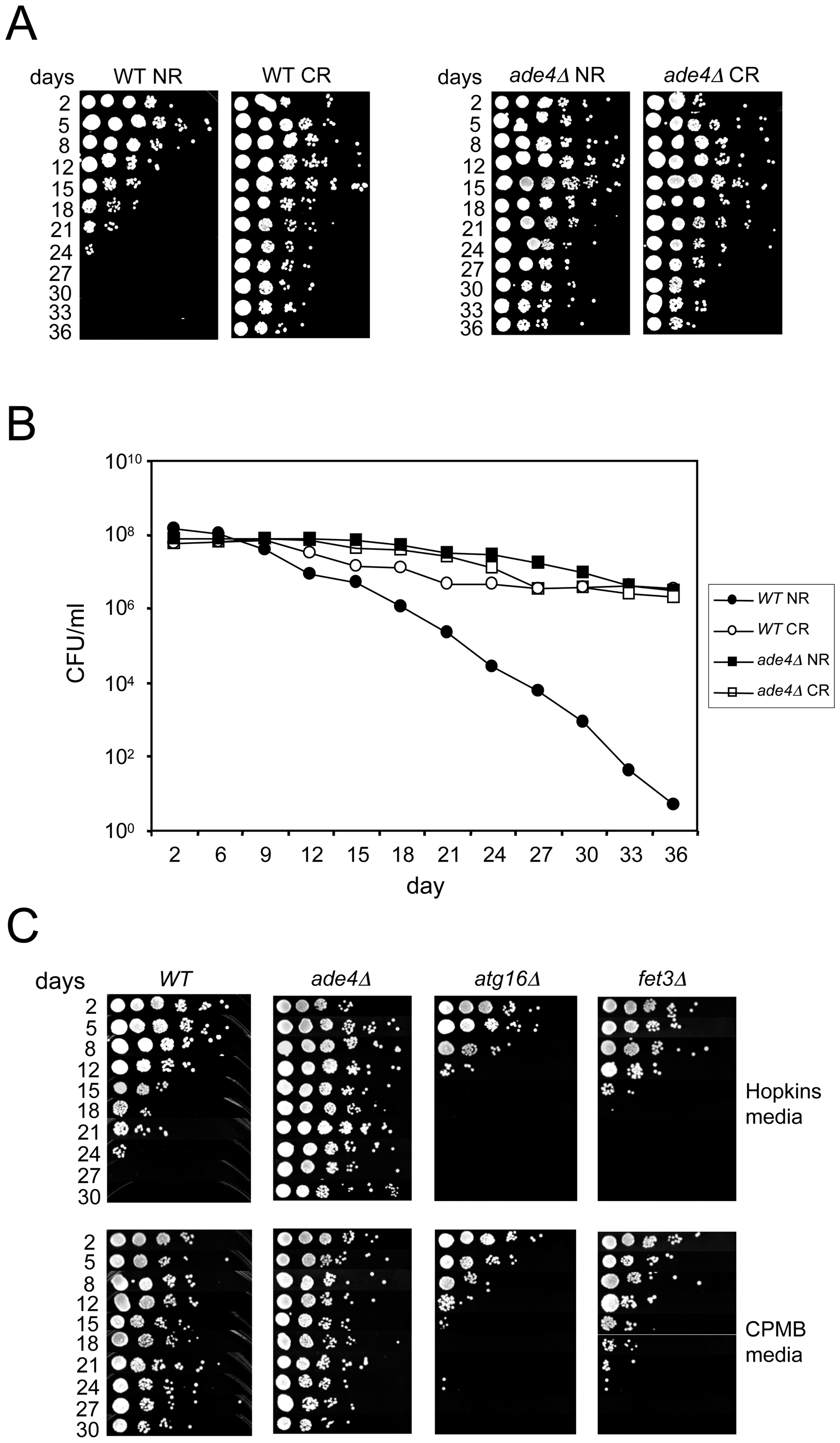 Growth media effects on CLS.