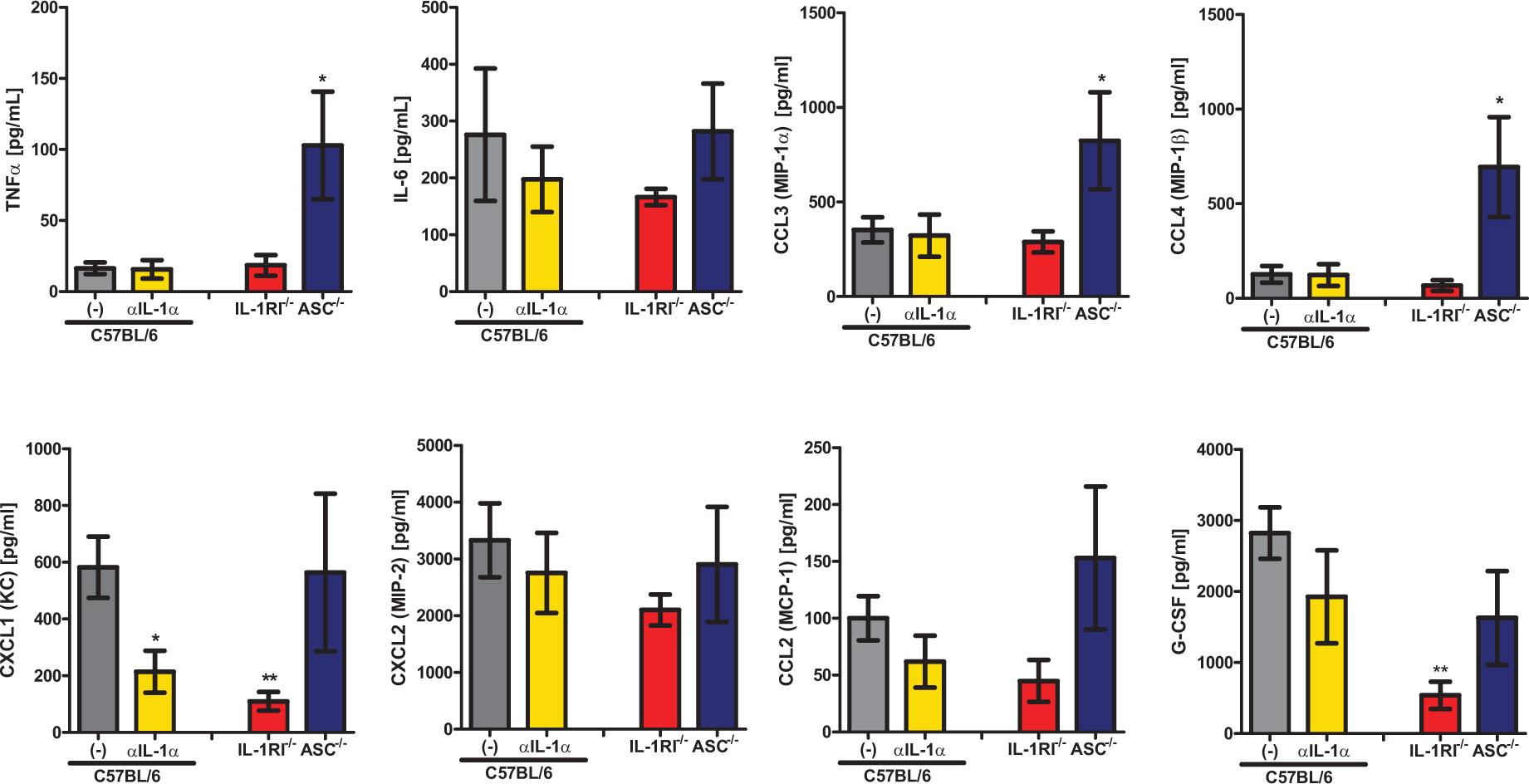IL-1α signaling enhances expression of leukocyte recruiting chemokines.