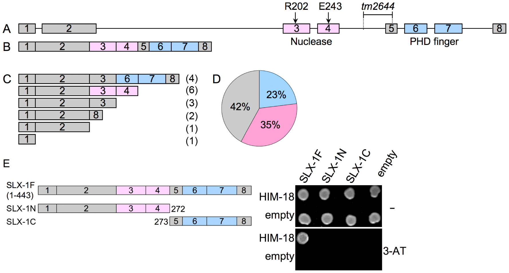<i>slx-1</i>(<i>tm2644</i>) mutants express splice variants that lack the C-terminus region required for an interaction with HIM-18, therefore encoding for nuclease-negative variants of SLX-1.
