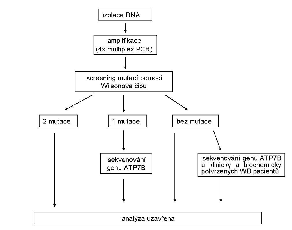 Schéma postupu molekulárně-genetického vyšetření Wilsonovy choroby