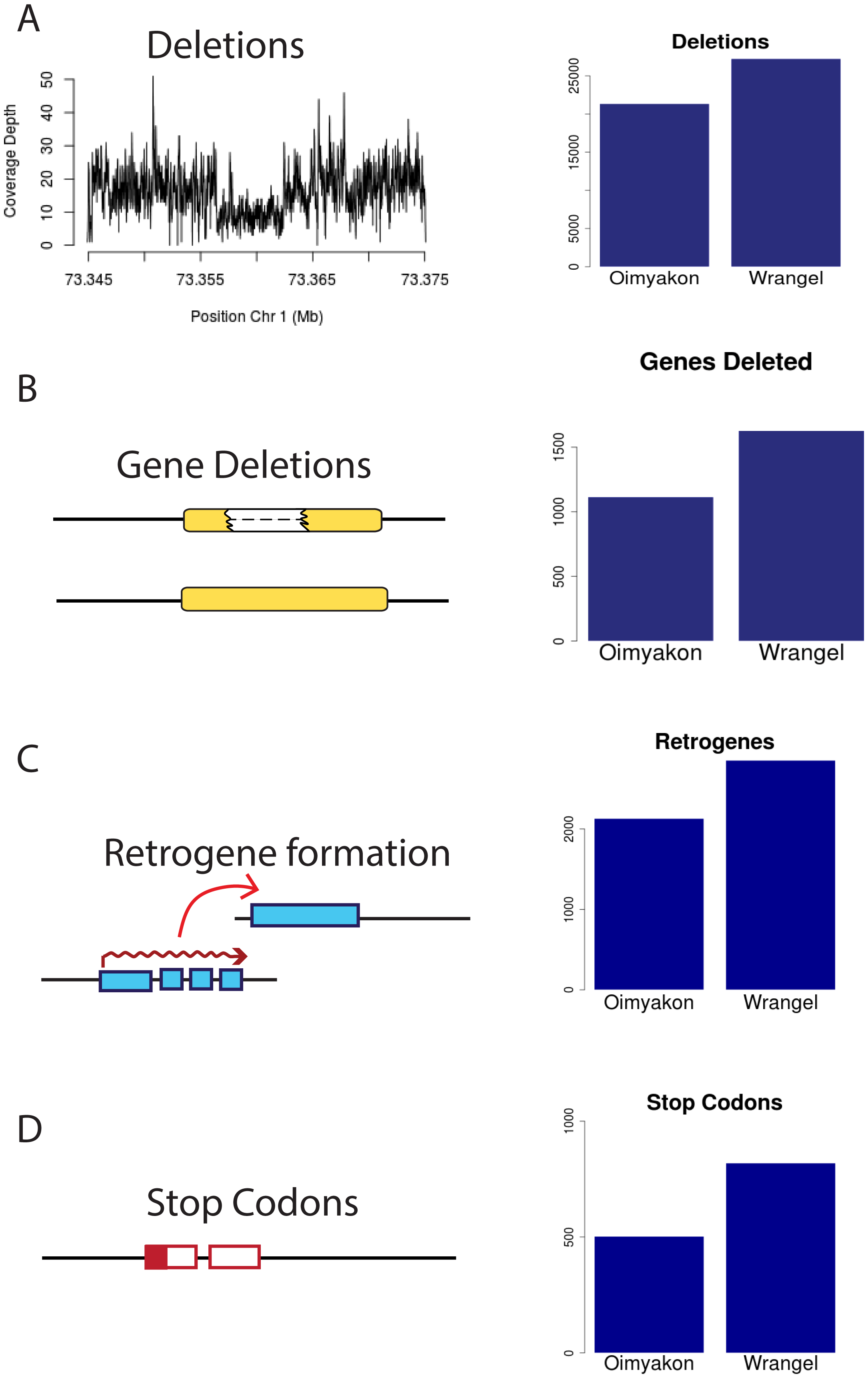 Excess of putatively detrimental mutations in the Wrangel island genome.