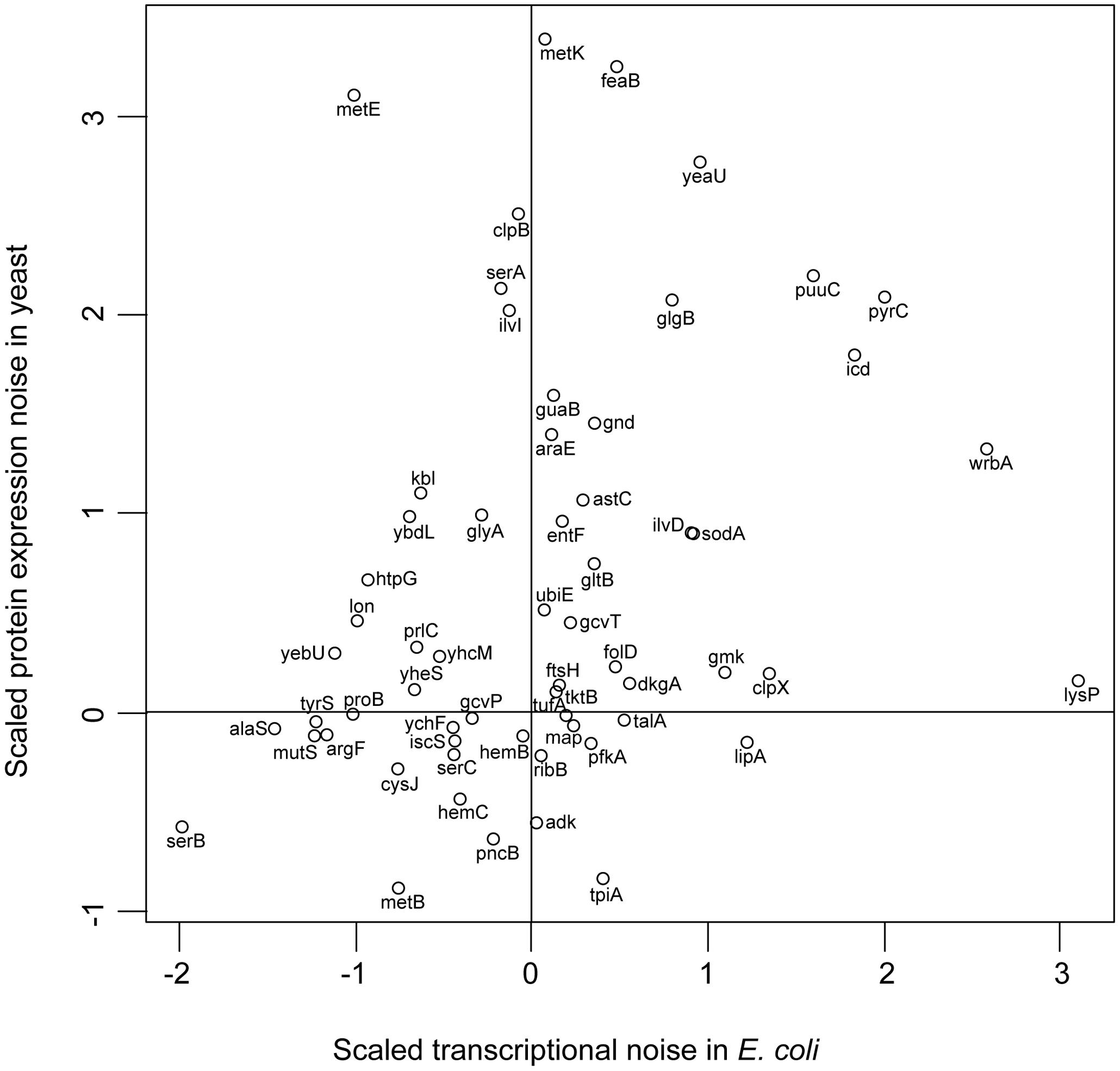 <i>E. coli</i> and yeast orthologues have similar noise levels.
