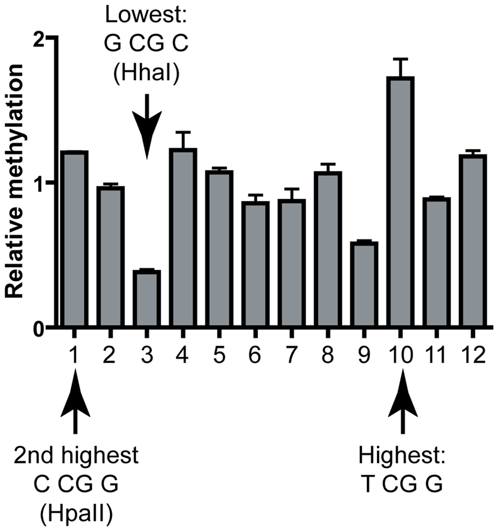 Validation of the DNMT3B sequence preference at the human <i>TIMELESS</i> CpG island.