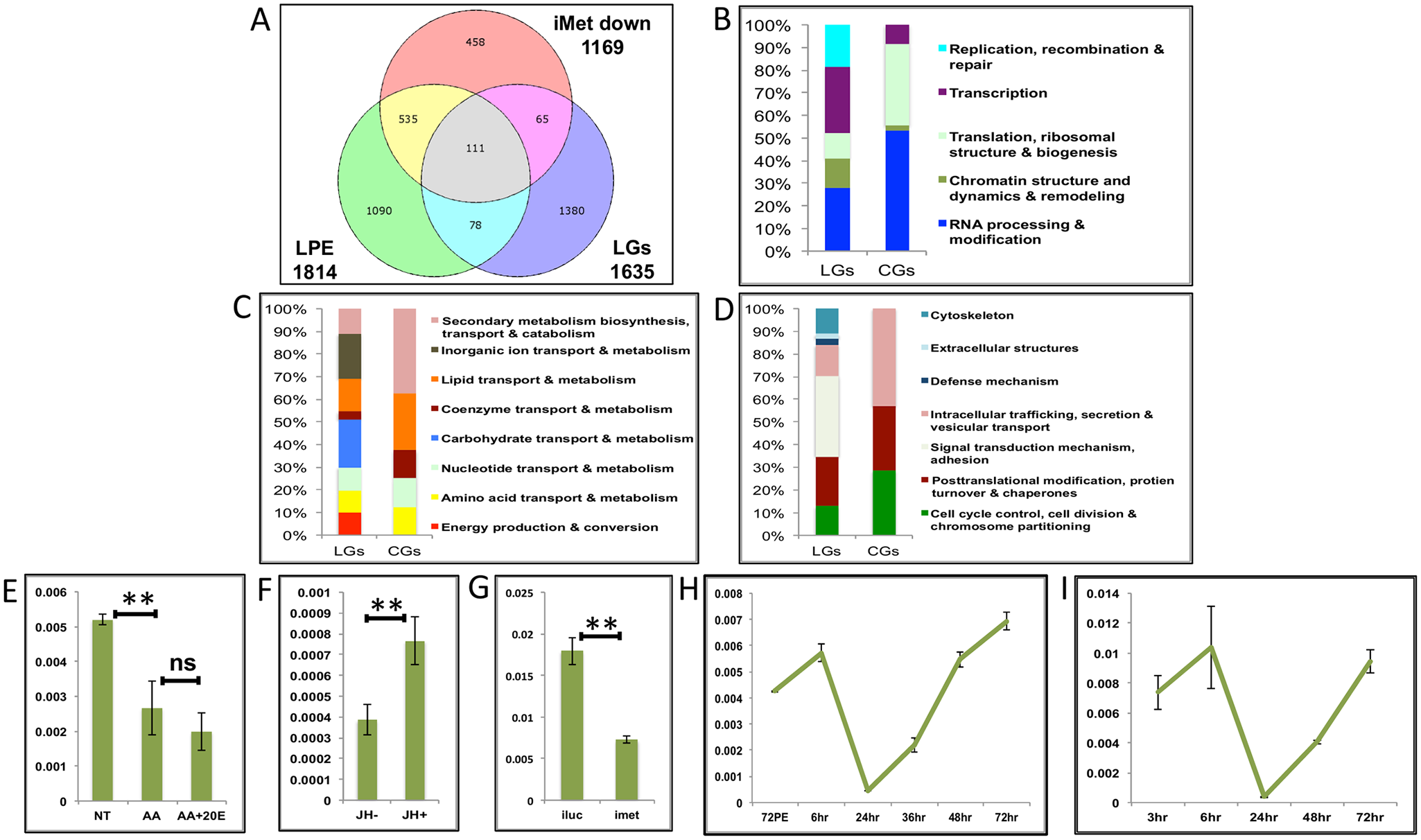 Genes cyclically activated by JH through Met—Functional group enrichment and the effects of AAs, 20E and JH.