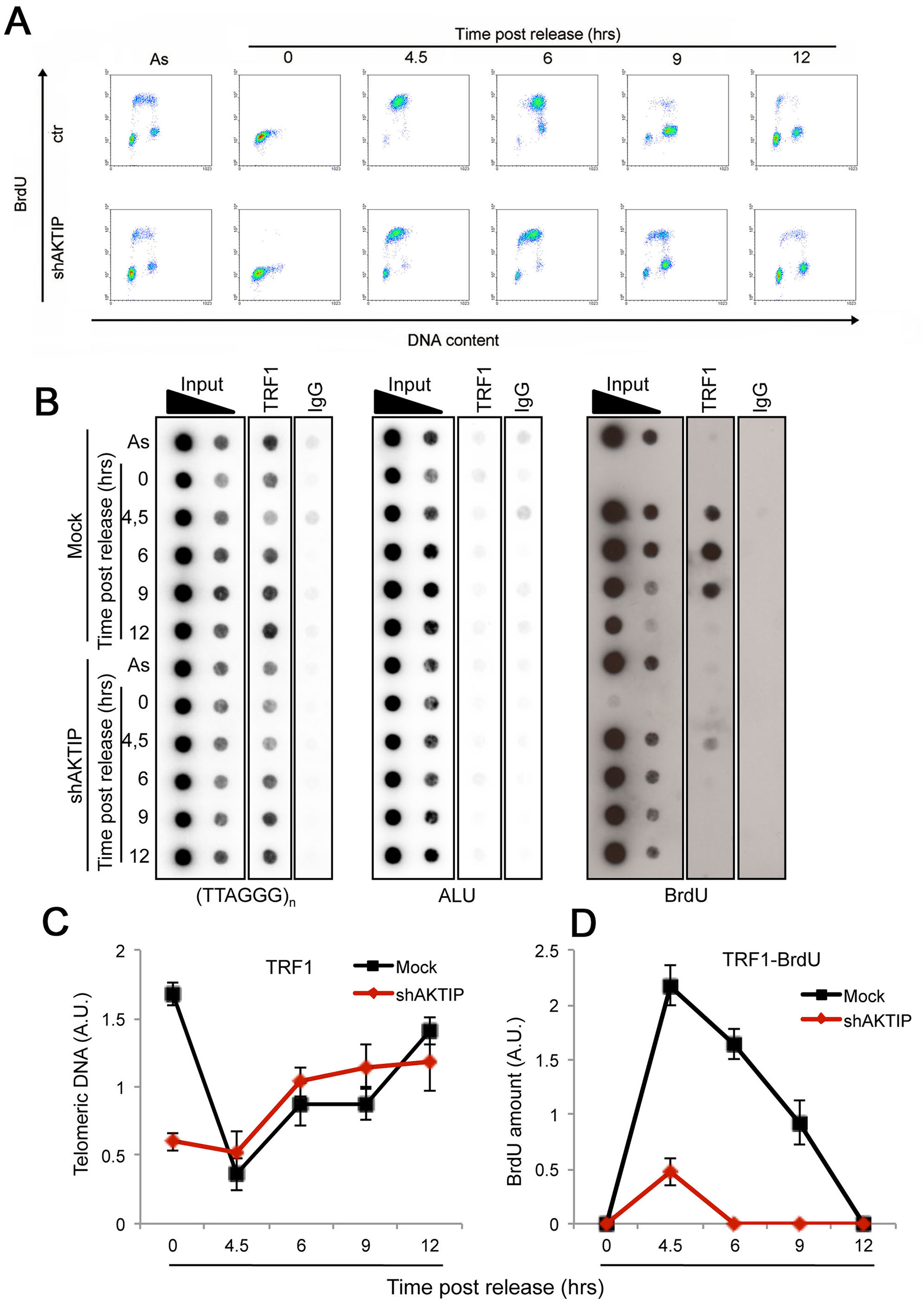 AKTIP downregulation impairs telomere replication.