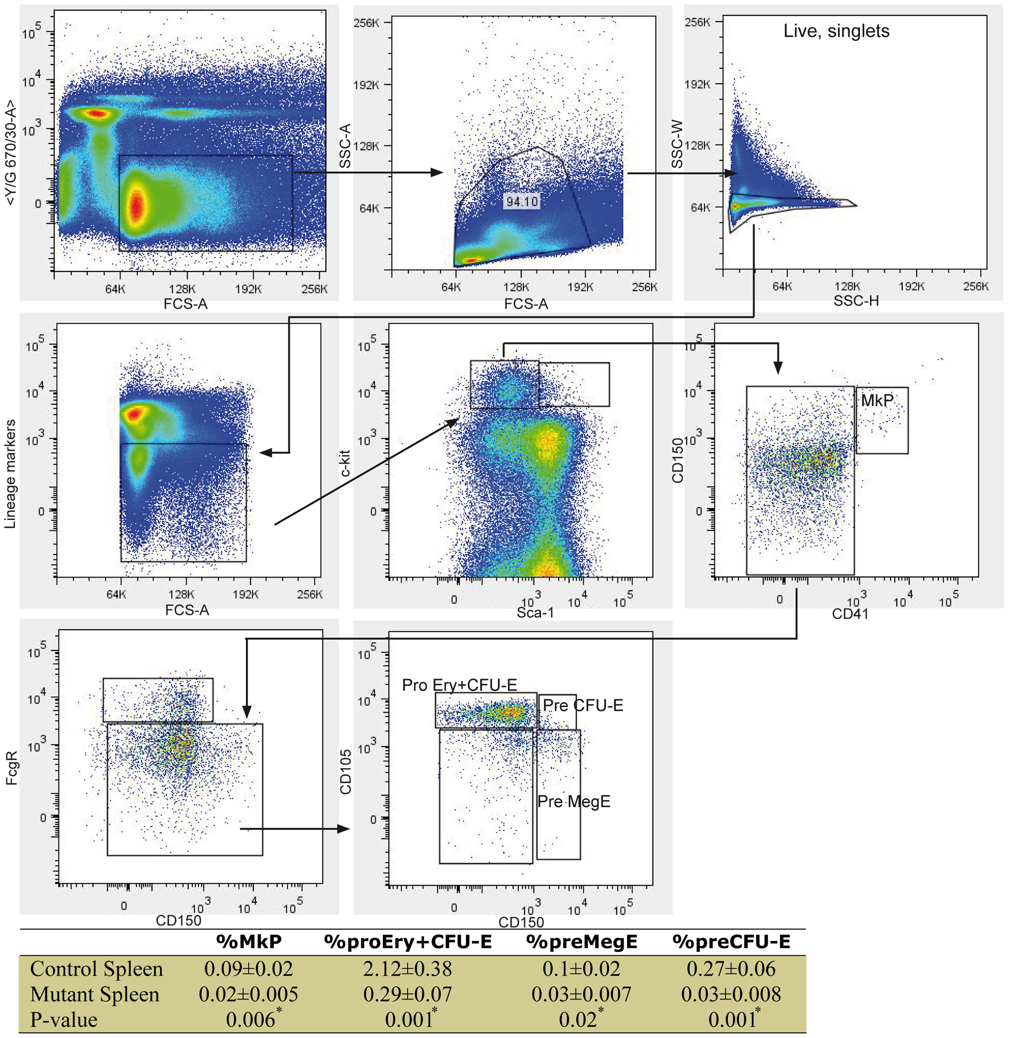 High-resolution fractionation of erythroid progenitors in mutant spleen.