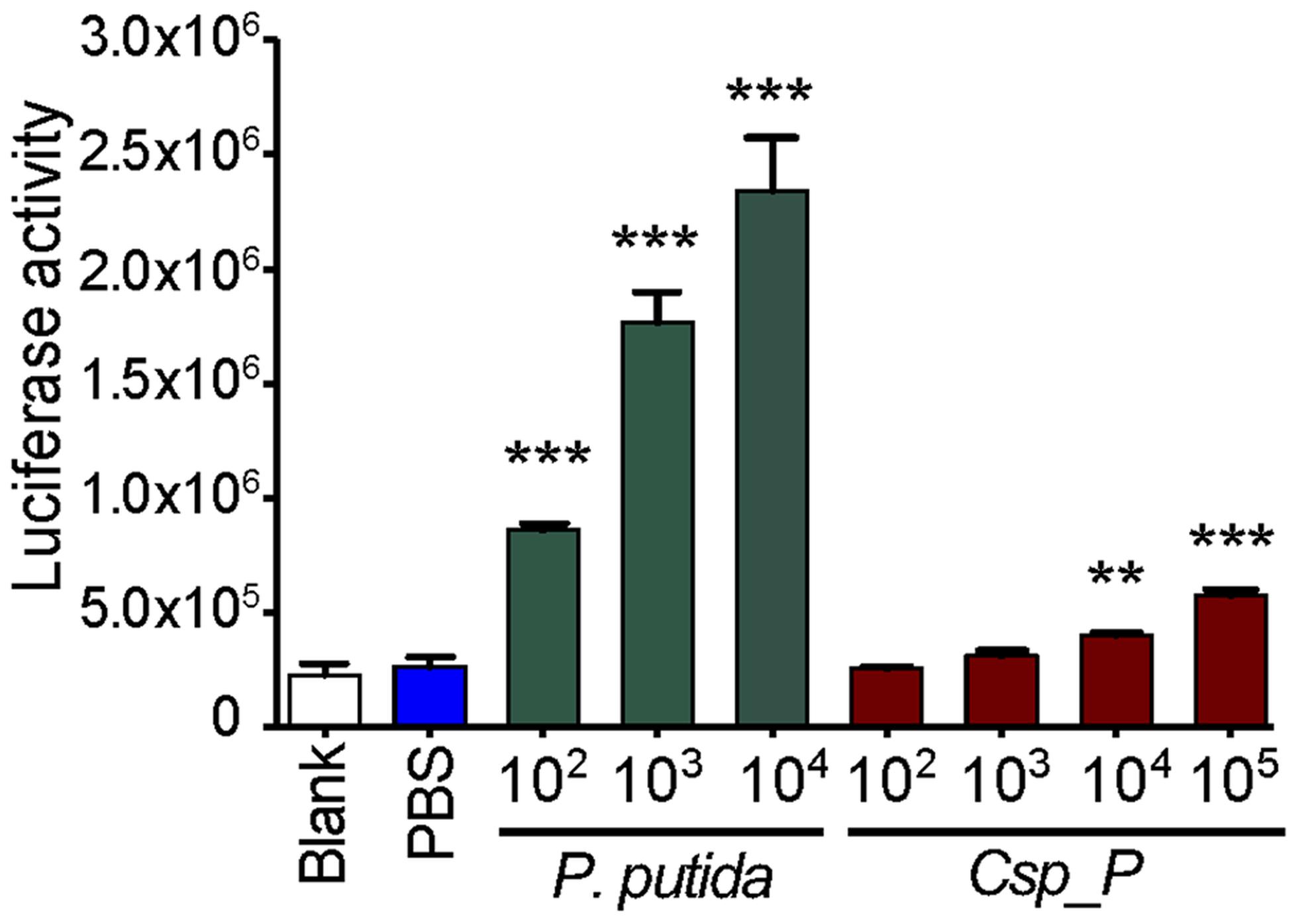 <i>Csp_P</i> elicits immune gene expression in the mosquito.
