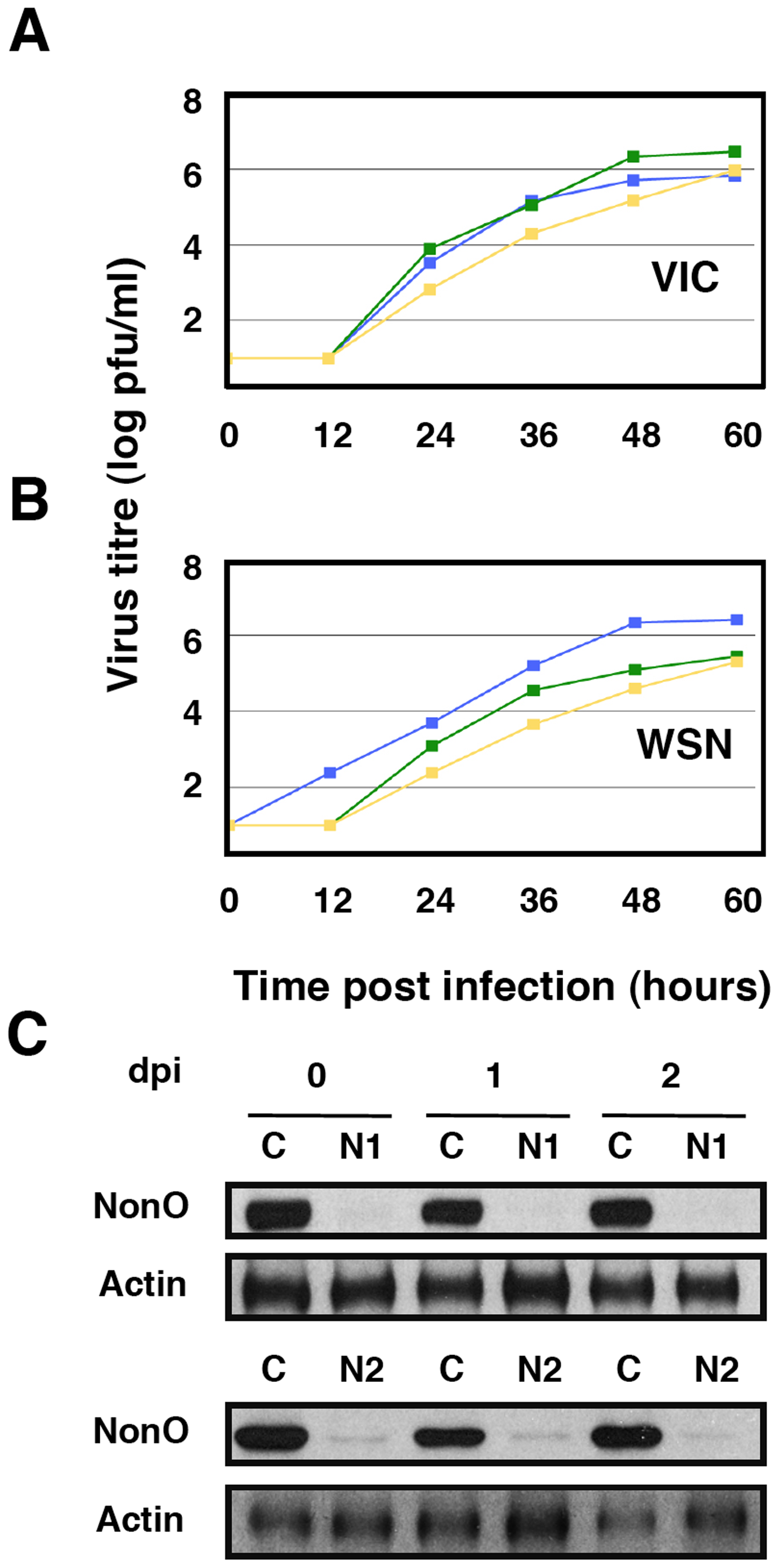 Kinetics of influenza virus multiplication in NonO-silenced cells.