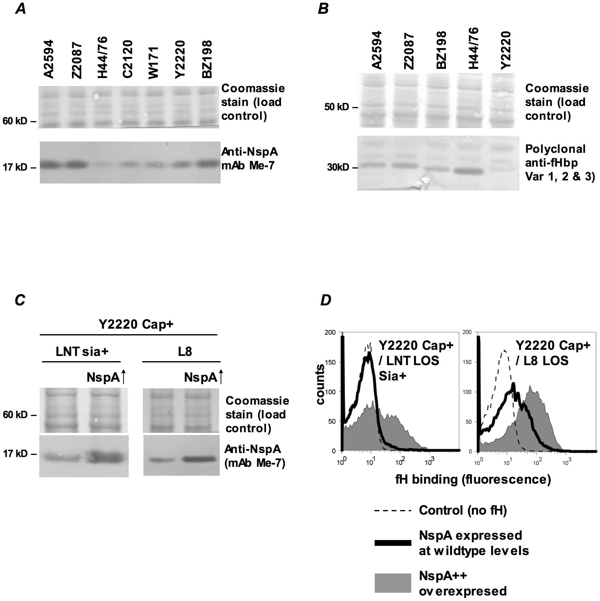 fH binding increases with increasing NspA expression.