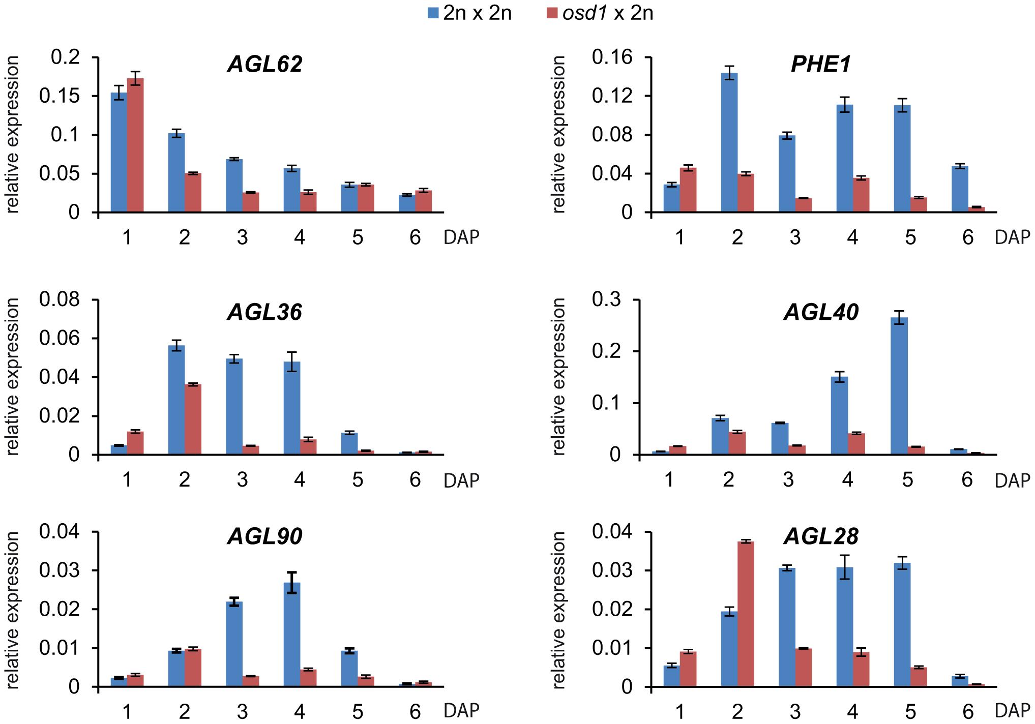 Expression of <i>AGL</i> MADS Box Genes Is Decreased in <i>osd1</i>×2n Crosses.