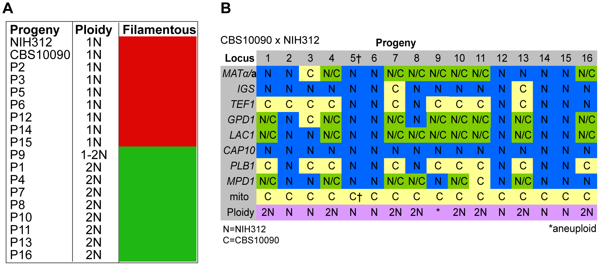 Molecular characterisation of progeny from outgroup cross CBS10090 x NIH312.