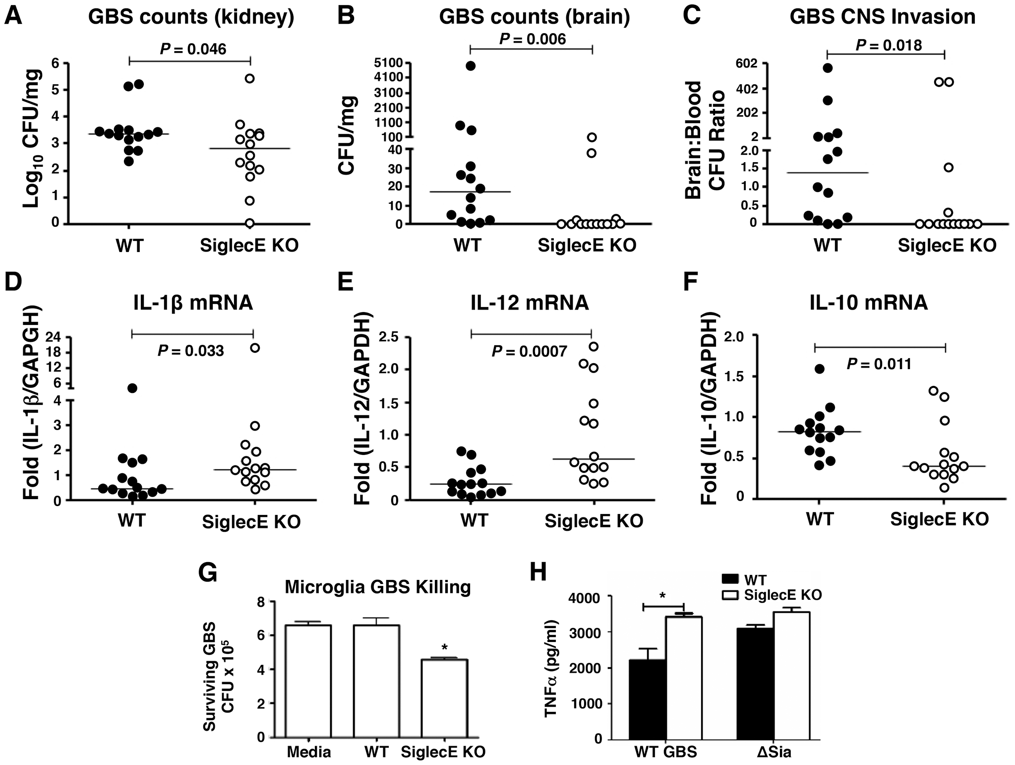 Reduced brain dissemination and enhanced bactericidal responses in Siglec-E deficient mice upon sublethal GBS challenge.