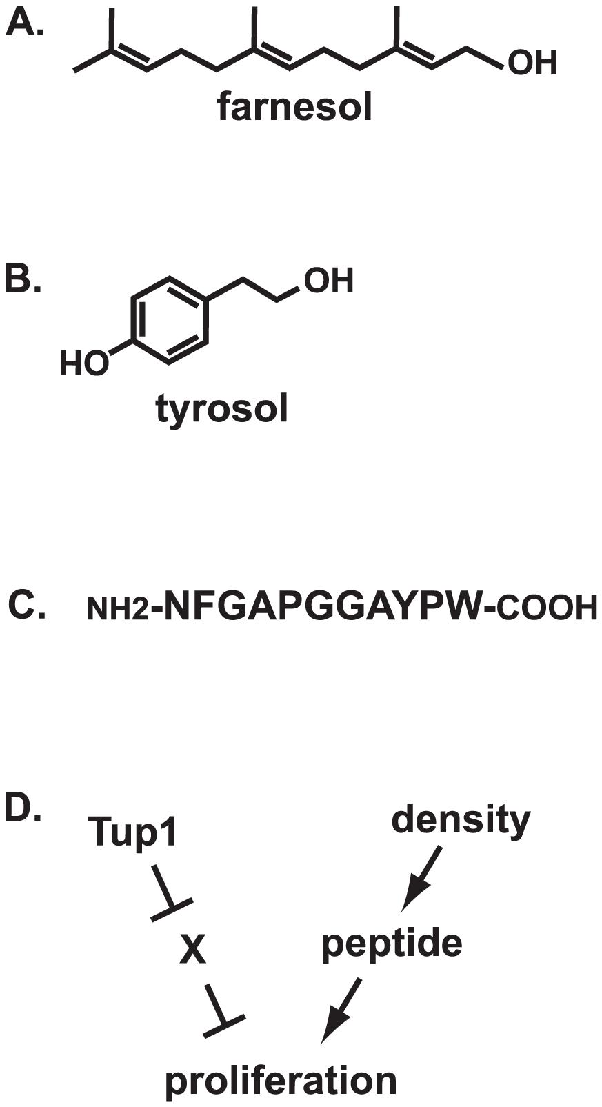 Fungal quorum-sensing molecules and mechanisms.