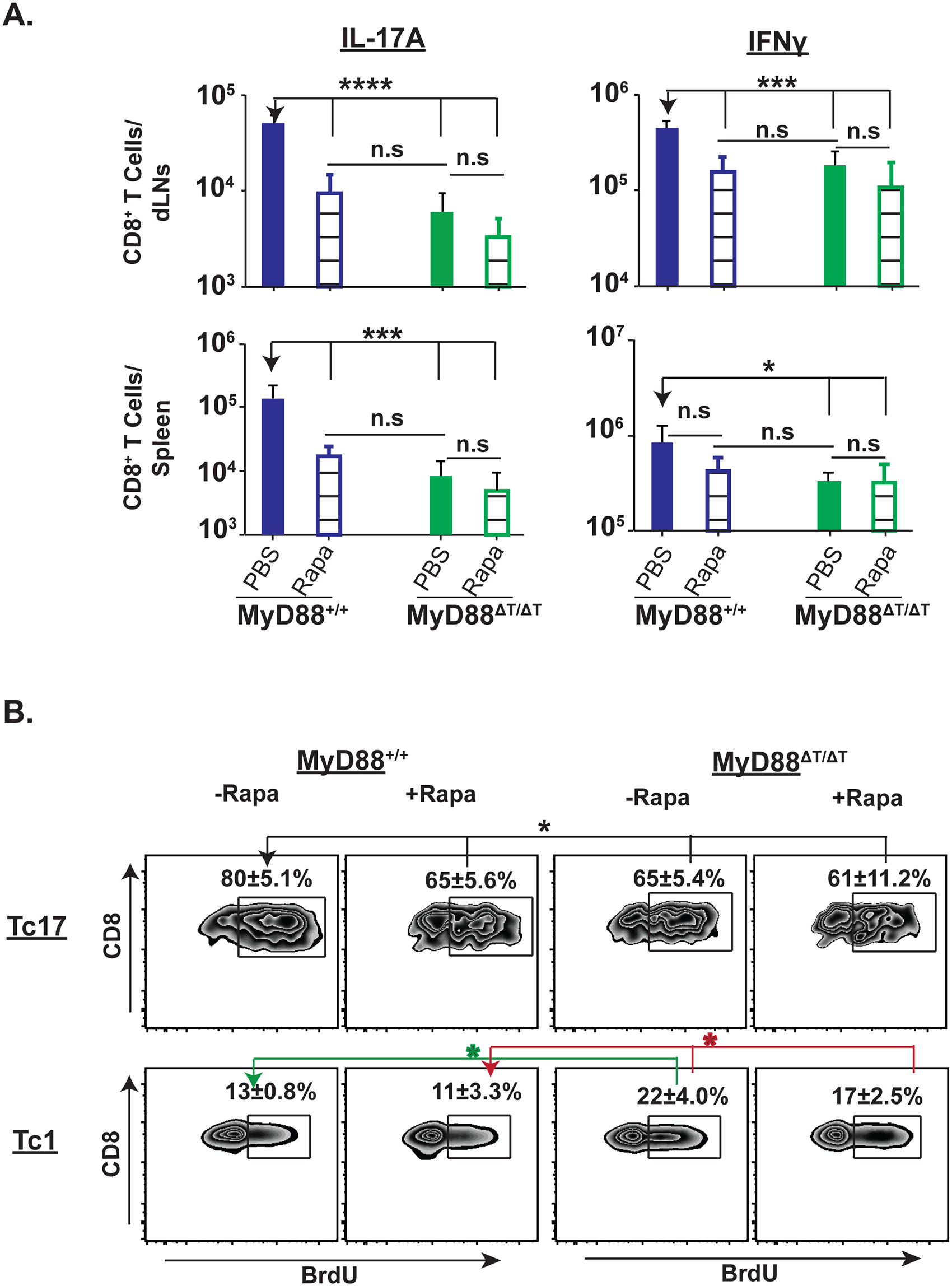 Rapamycin treatment blunts Tc17 cell responses and proliferation.