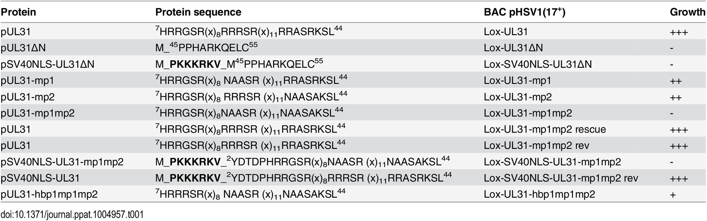N-terminal mutants of pUL31.