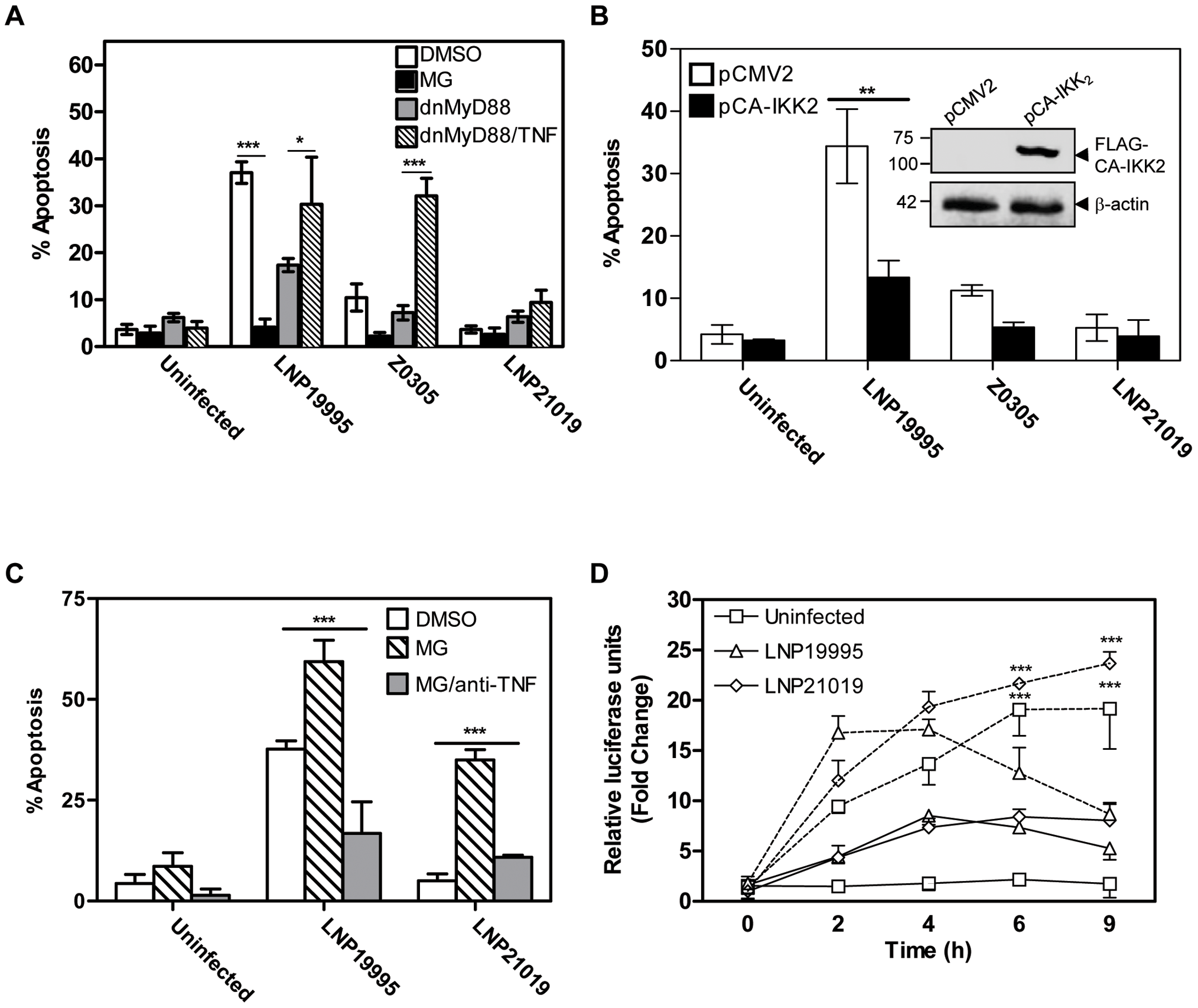 Role of NF-κB in apoptosis of Hec-1B cells induced by meningococcal ST-11 isolates.