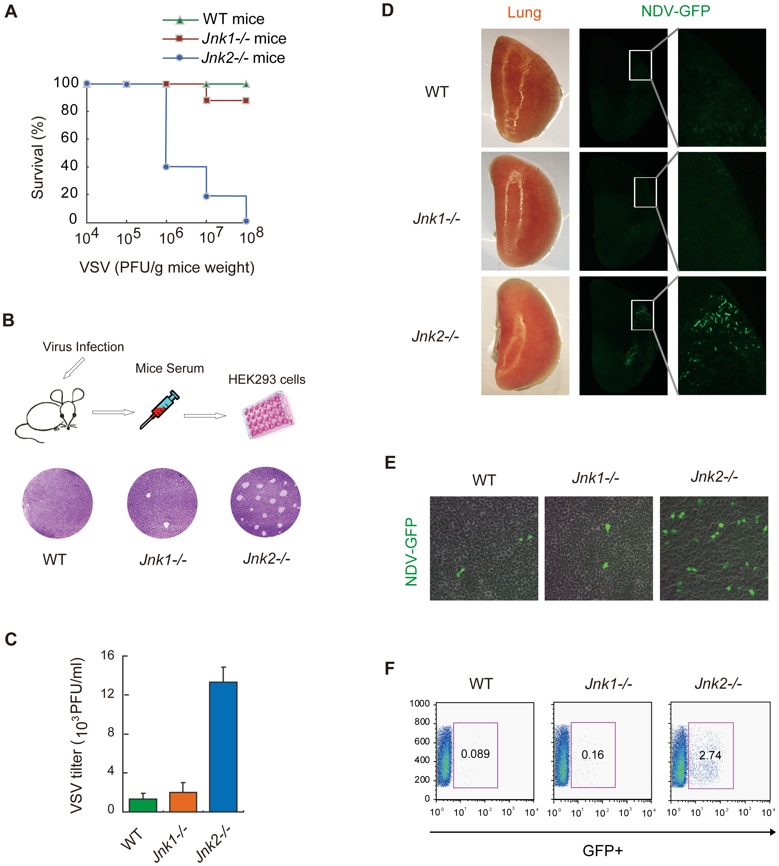 JNK2, but not JNK1, protects mice against viral infection <i>in vivo</i>.