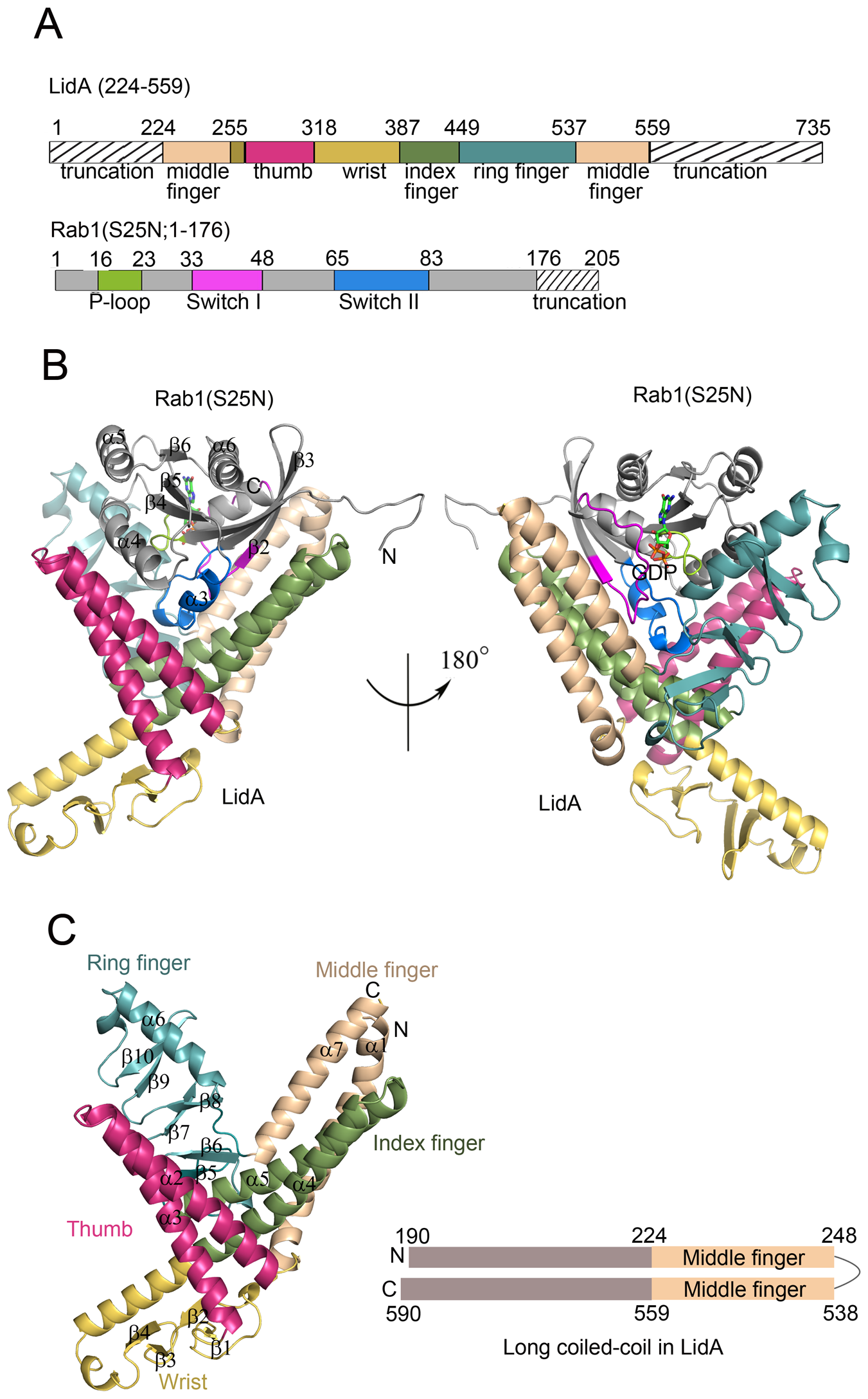 Overall structures of LidA and its complex with GDP-bound Rab1.