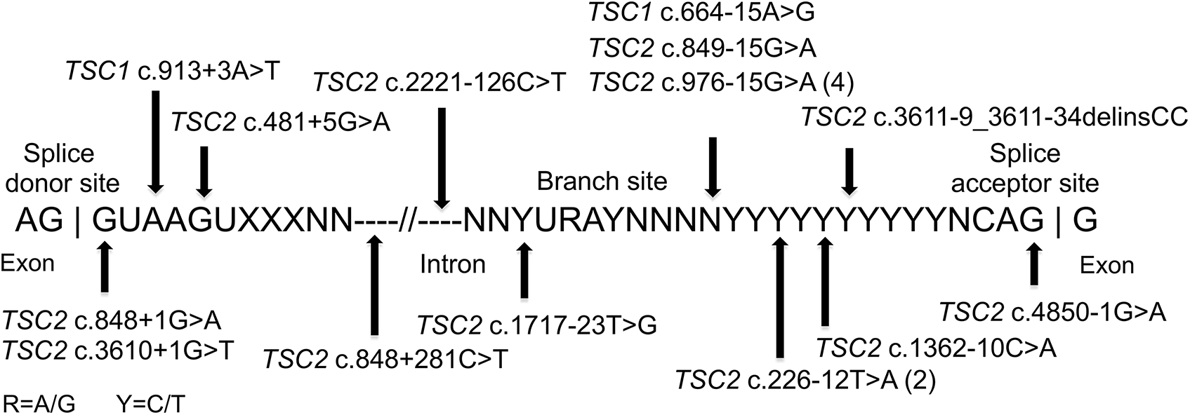 Intronic mutations in 18 TSC NMI subjects.