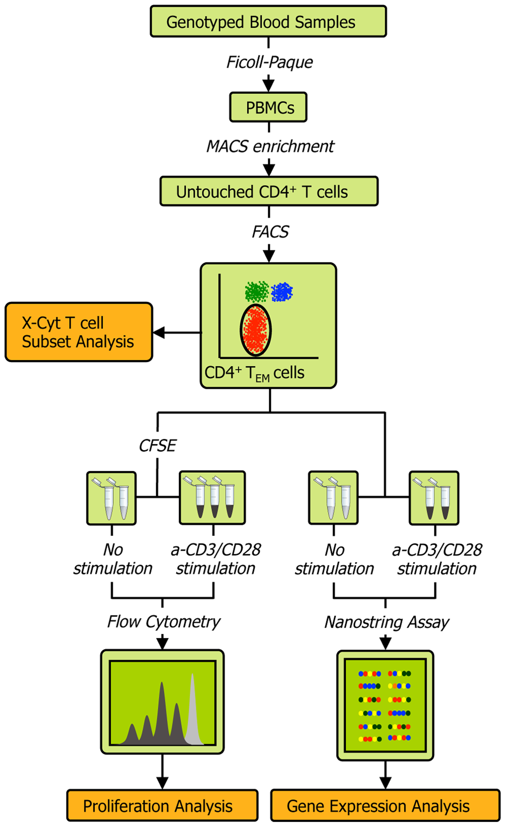Schematic of the experimental workflow.