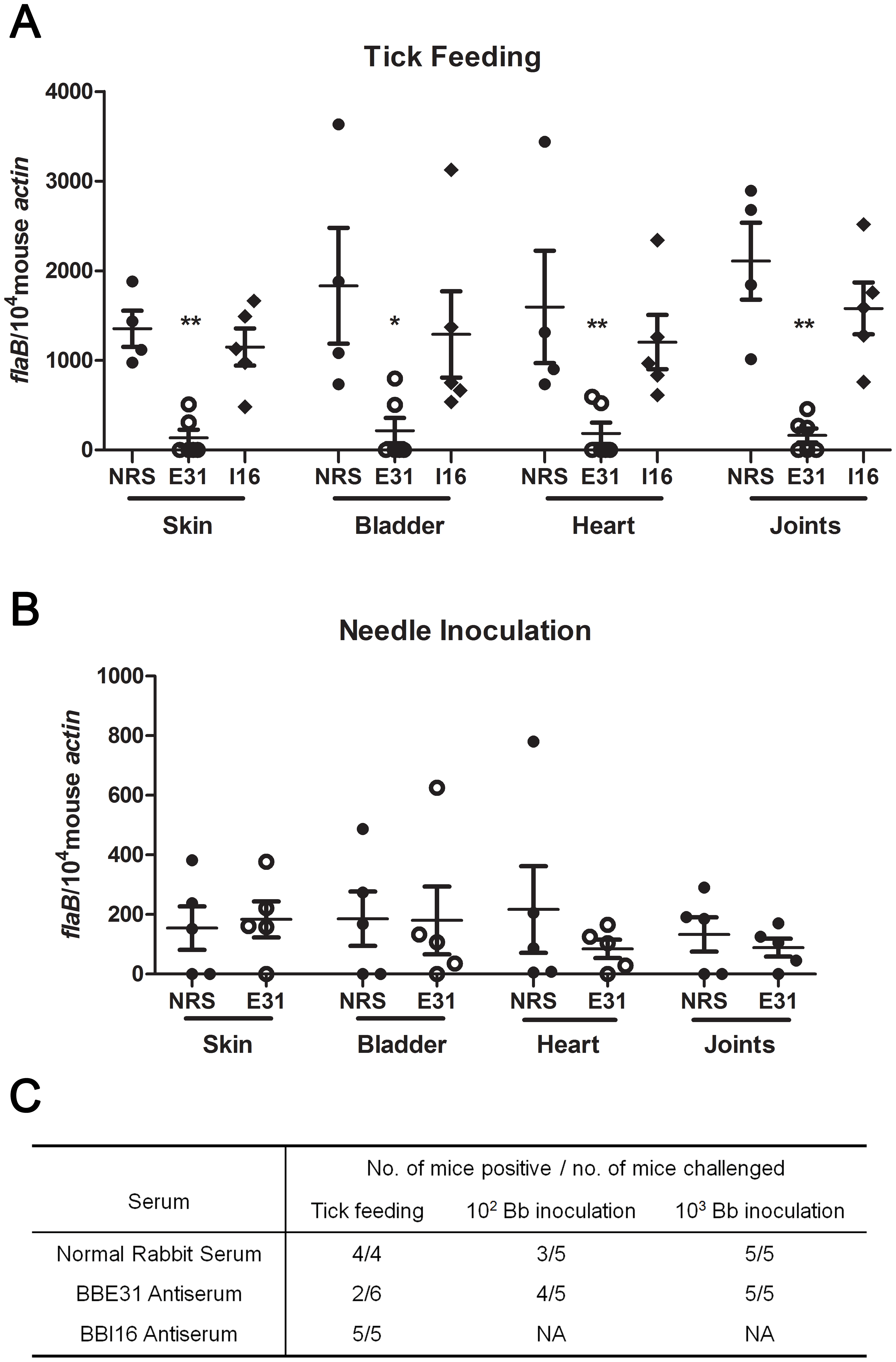 Influence of BBE31 antibodies on <i>B.burgdorferi</i> infectivity in mice.