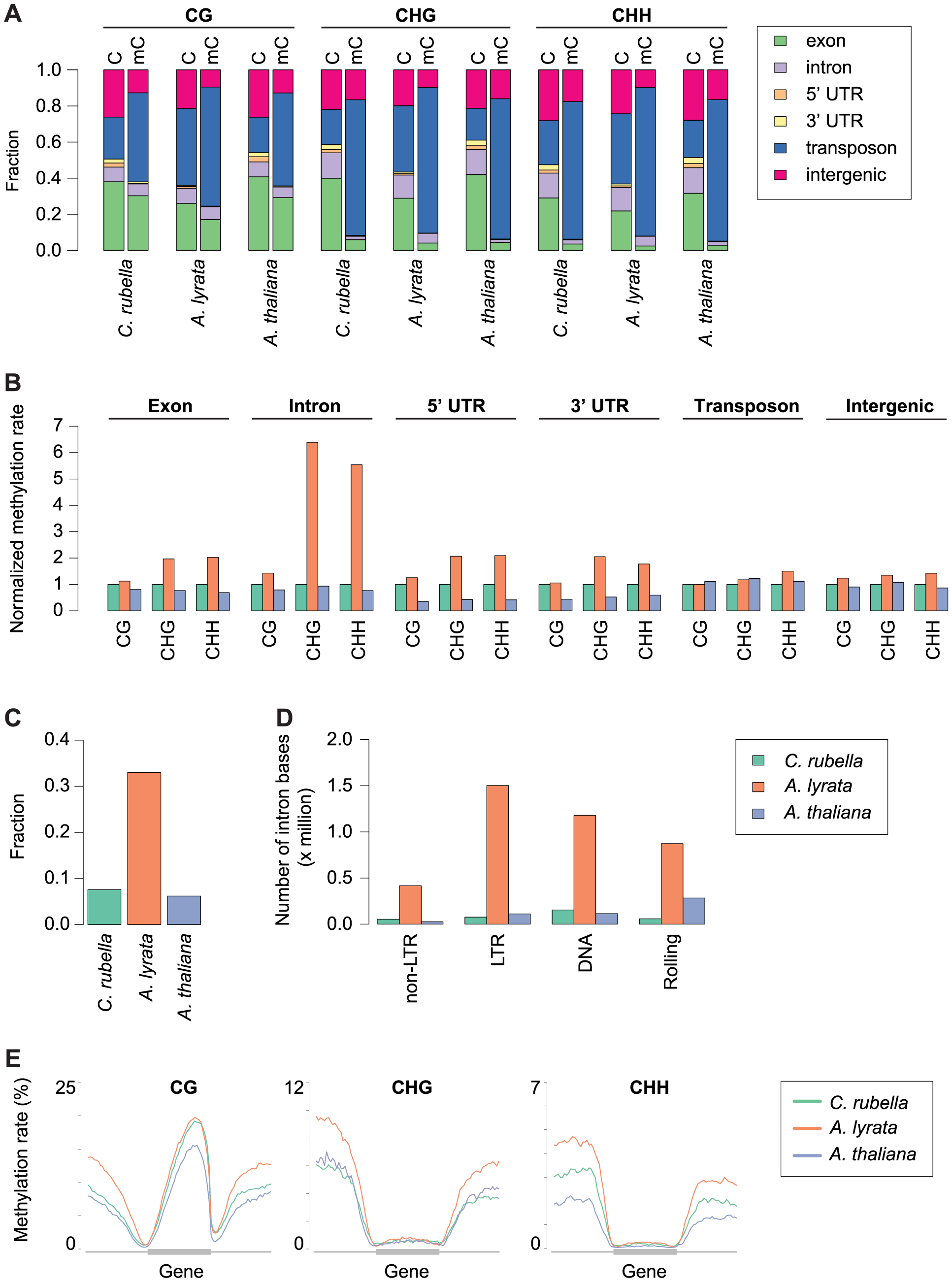 Impact of repeat expansion on DNA methylation at genomic features.