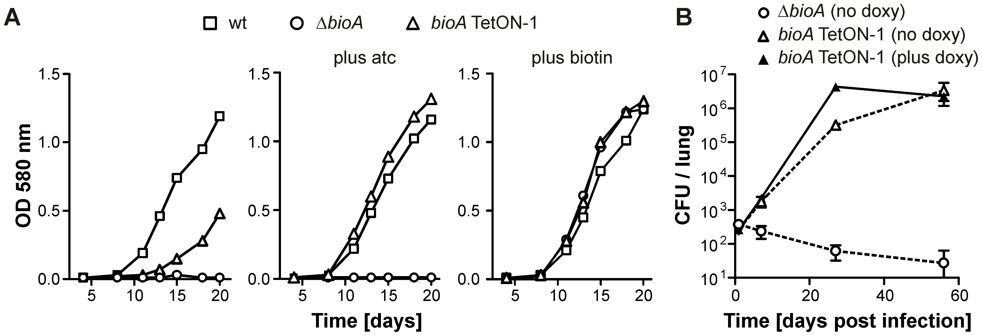 Growth of wt <i>Mtb</i>, <i>ΔbioA</i>, and <i>bioA</i> TetON-1 in liquid media and mice.