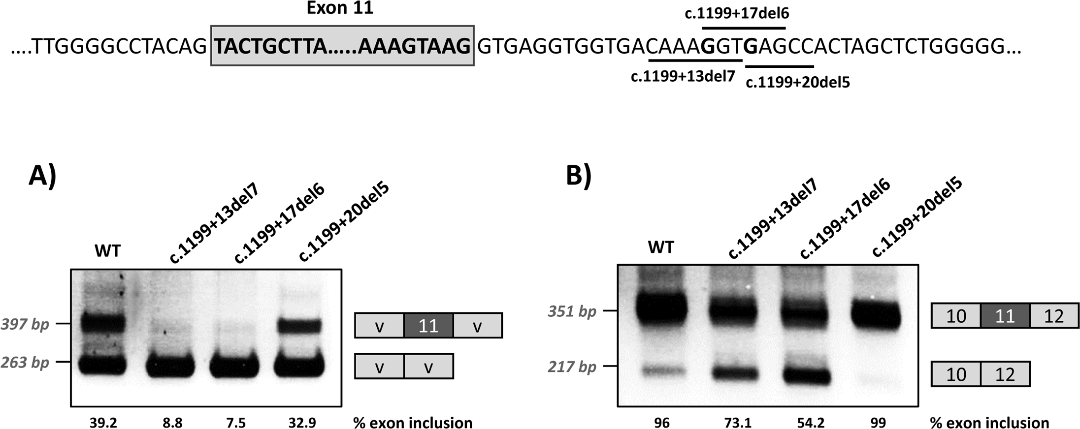 Effect of intronic deletions on minigenes splicing profile.