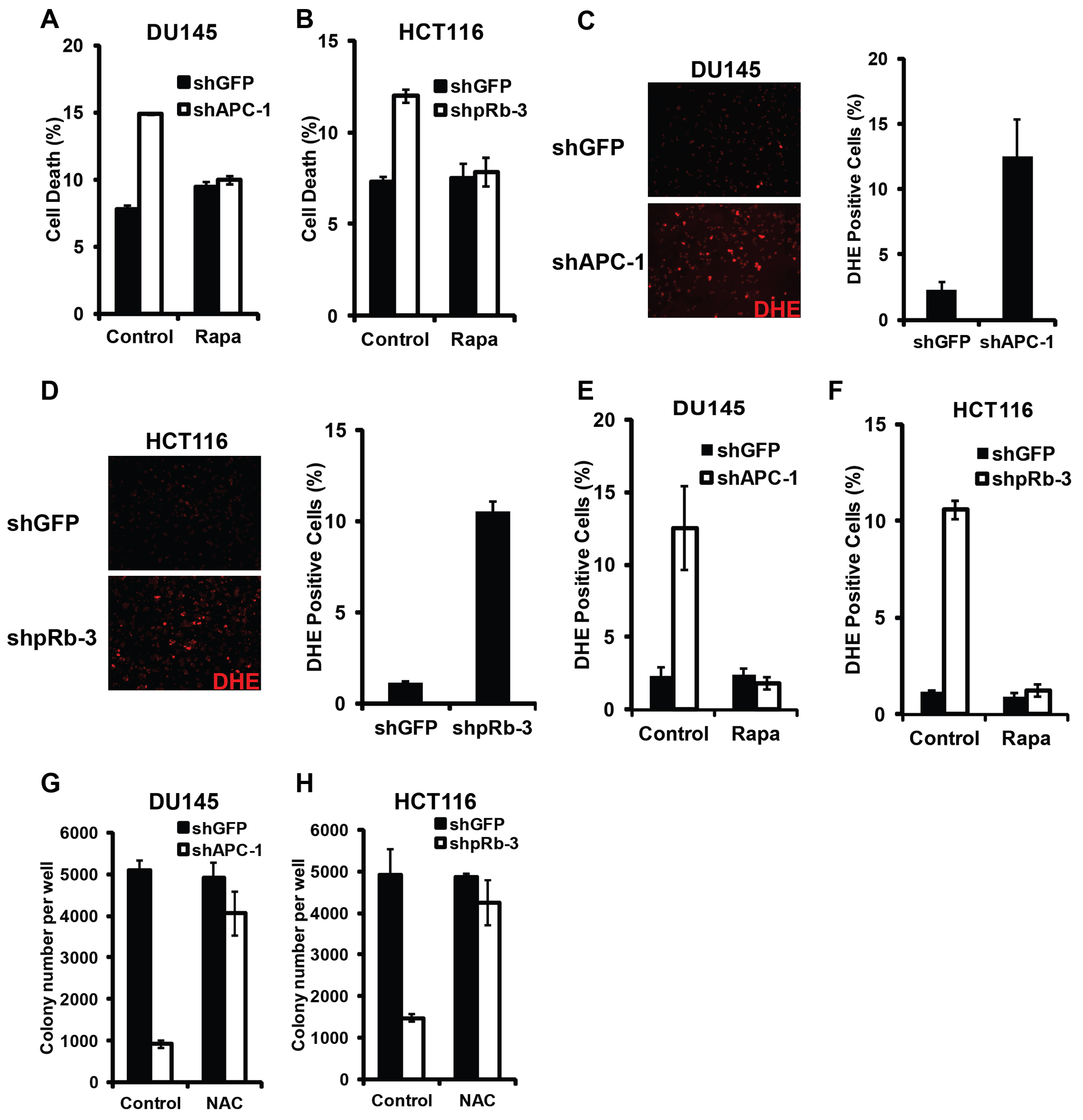 Synergistic cell death induced by hyperactivated Wnt signaling and Rb inactivation require TORC1 activity and involve ROS induction.
