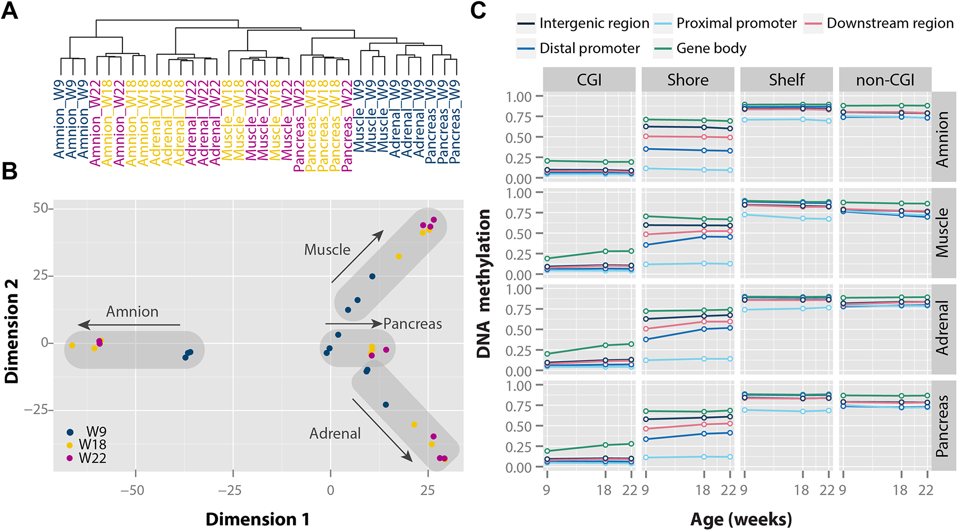 Tissue- and time-specific DNA methylation patterns during human fetal development.
