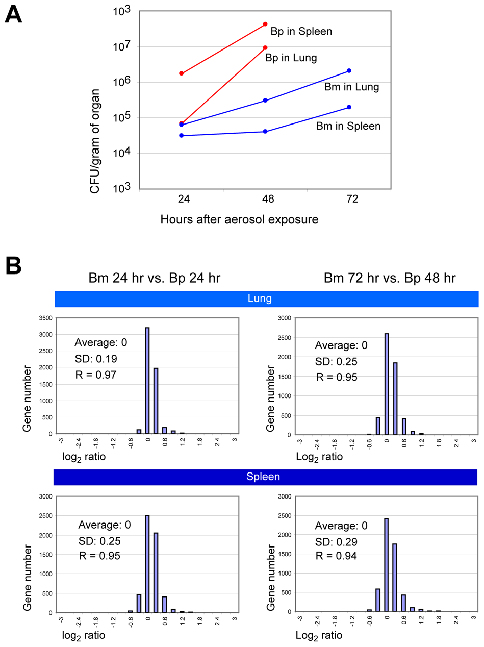 Comparison of <i>in vivo</i> gene expression patterns between <i>B. mallei</i> and <i>B. pseudomallei</i>.
