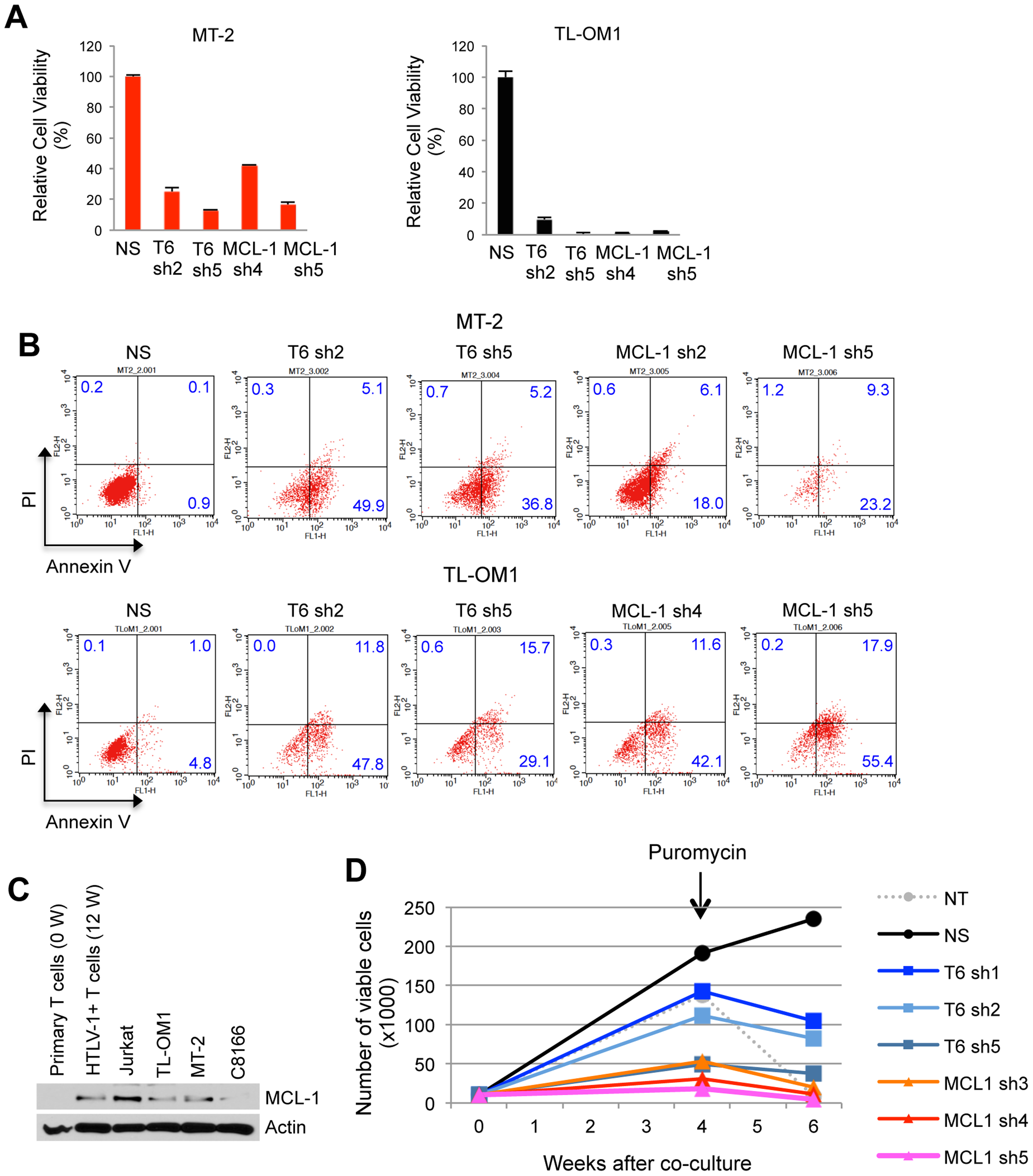 TRAF6 and MCL-1 are required for ATL cell survival and HTLV-1-mediated T-cell immortalization.
