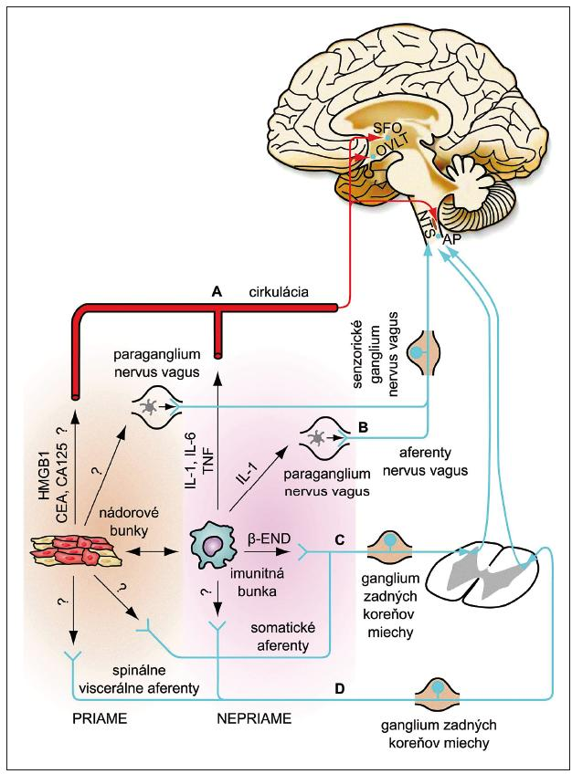 Predpokladané mechanizmy interakcií medzi nádorovým prostredím a centrálnym nervovým systémom [92].