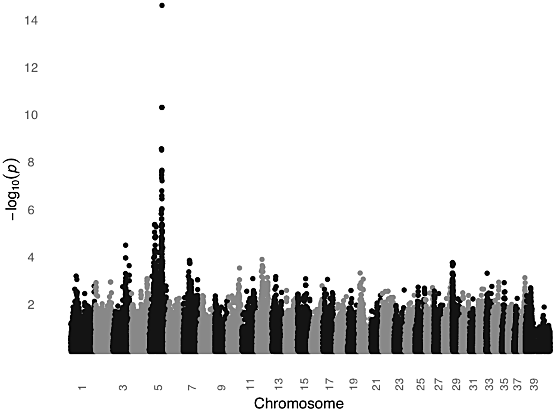 A significant association on CFA5 was identified in a GWAS comparing black and light colored STPOs.