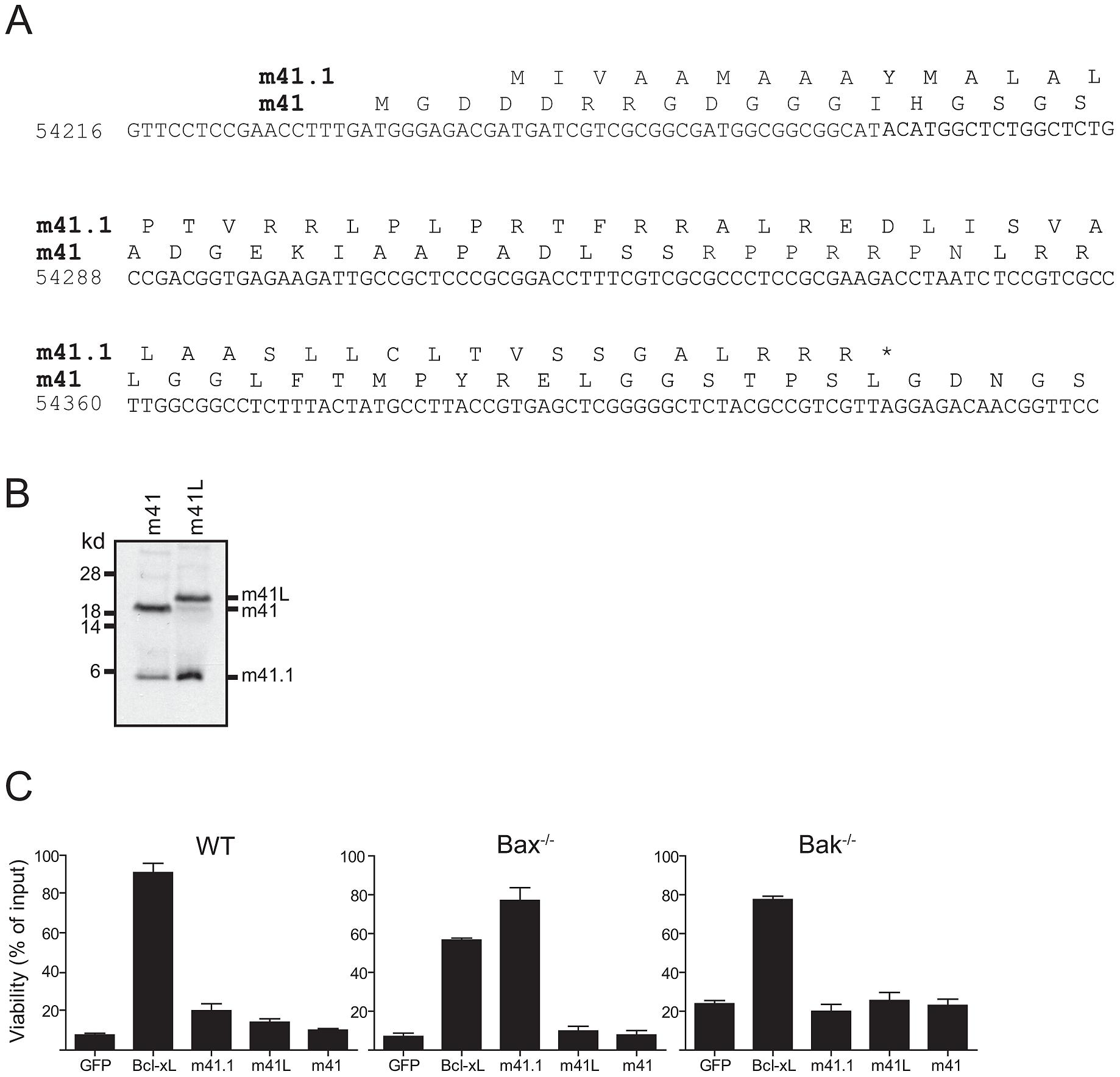 m41.1 encodes a Bak-specific inhibitor.
