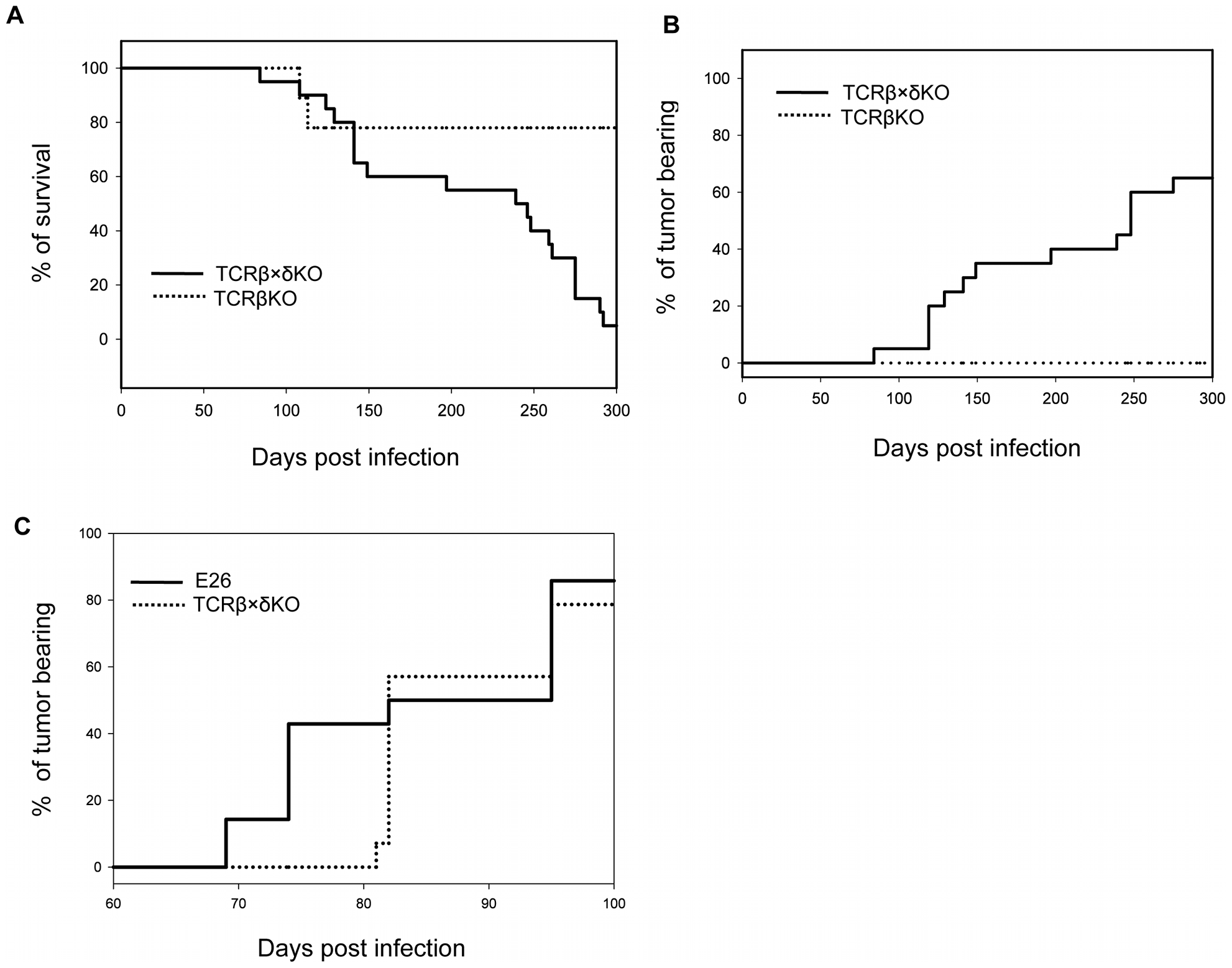 Survival and tumor incidence of PyV-infected TCRβ KO, TCRβ×δ KO and E26 mice.