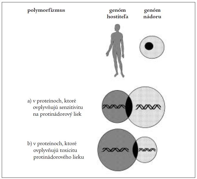 Genetický polymorfizmus v predikcii efektivity a toxicity liečby; voľne podľa [20].