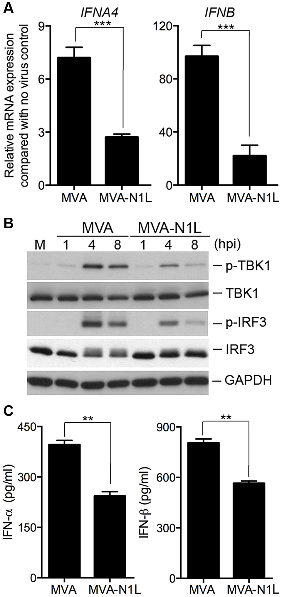 Vaccinia N1 virulence factor plays an inhibitory role in the type I IFN gene induction.